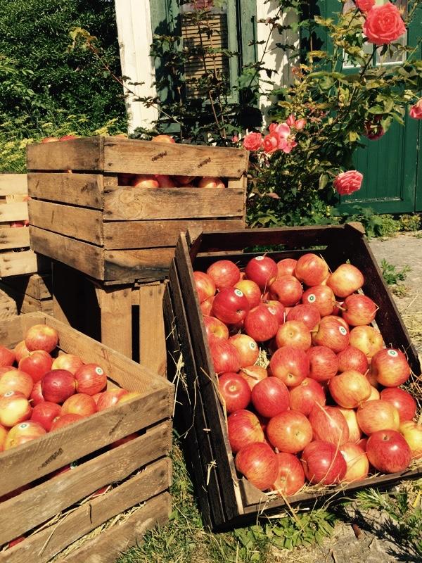 En stor leverans äpplen till Prime PR:s mingel under Almedalen.