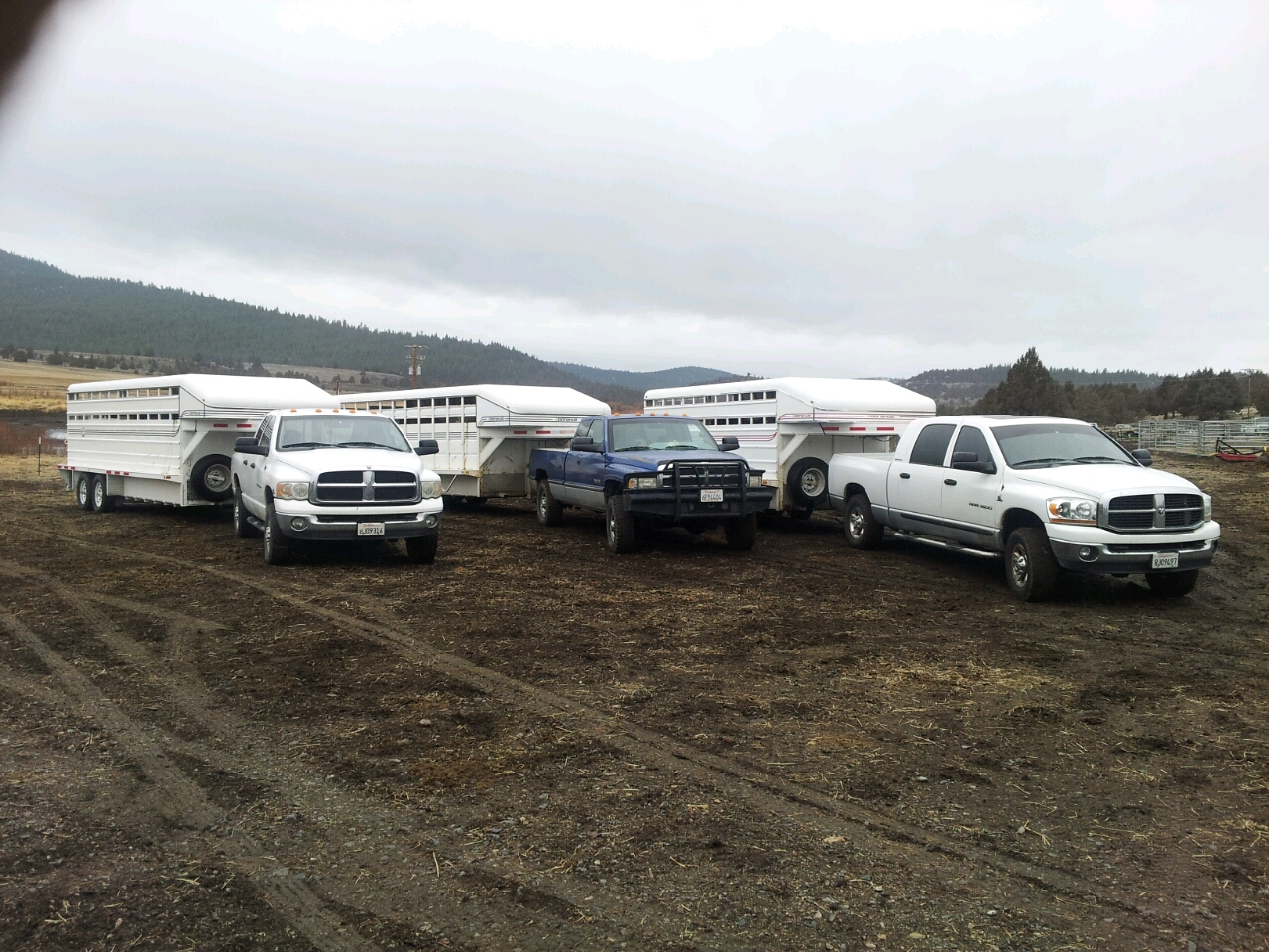 """True Dependability    """"After 14 years of dependability from our first Donahue trailer, we have added two more to the collection!""""   J. McCulley MU Ranch (Canby, CA)"""