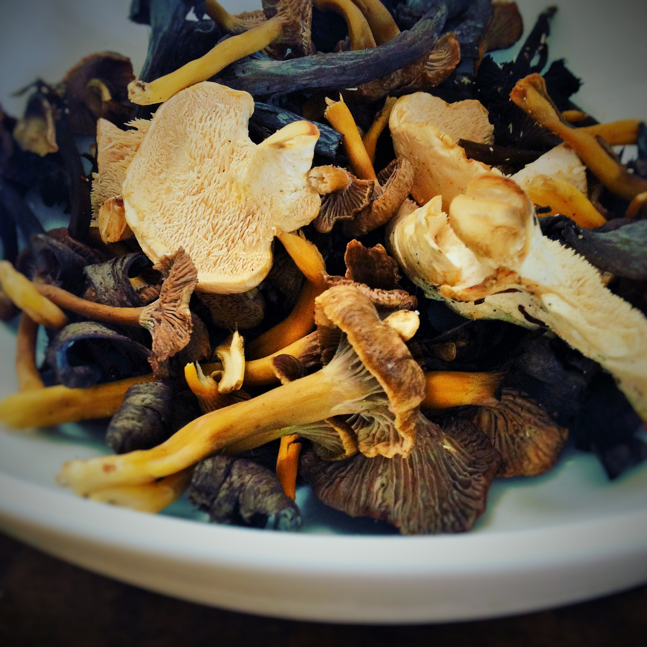 wild new forest mushrooms freshly picked