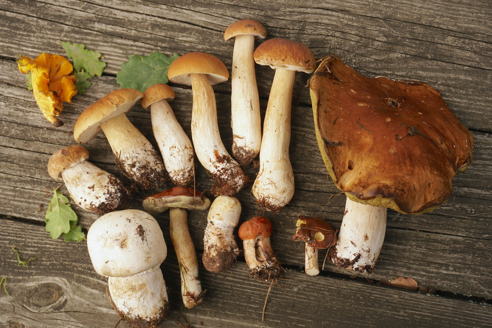 Mushrooms - shutterstock_713244868.png