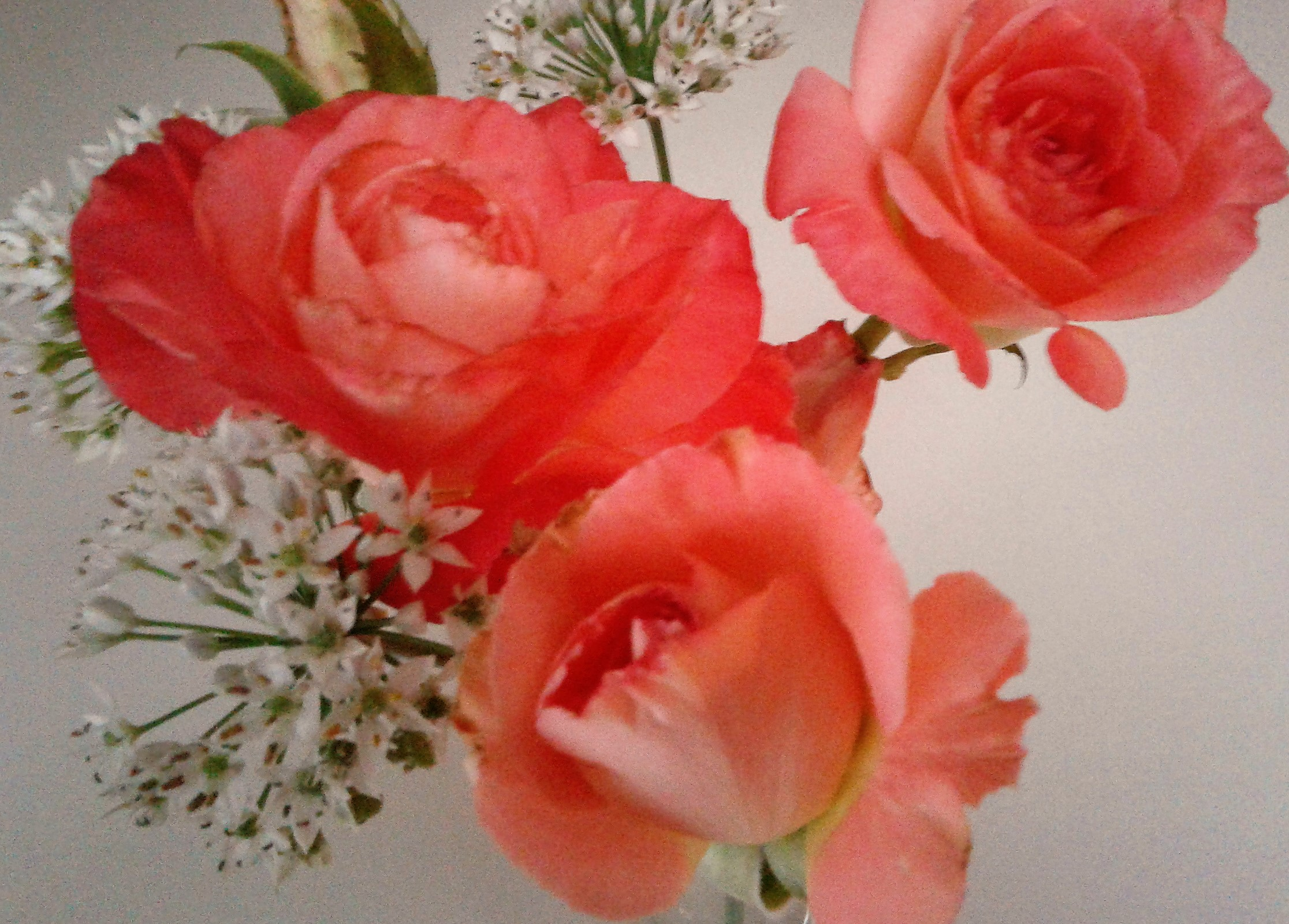 Summer Rose.jpg
