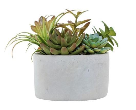 $14.99 Succulent Arrangement