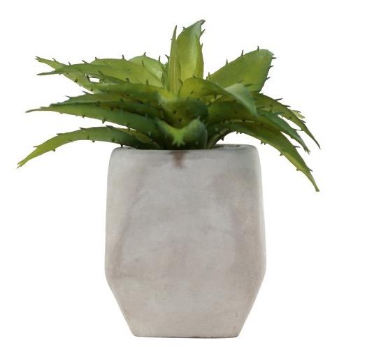 $6.99 Single Succulent