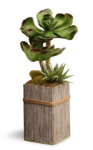 """$12.99 11"""" Plant"""