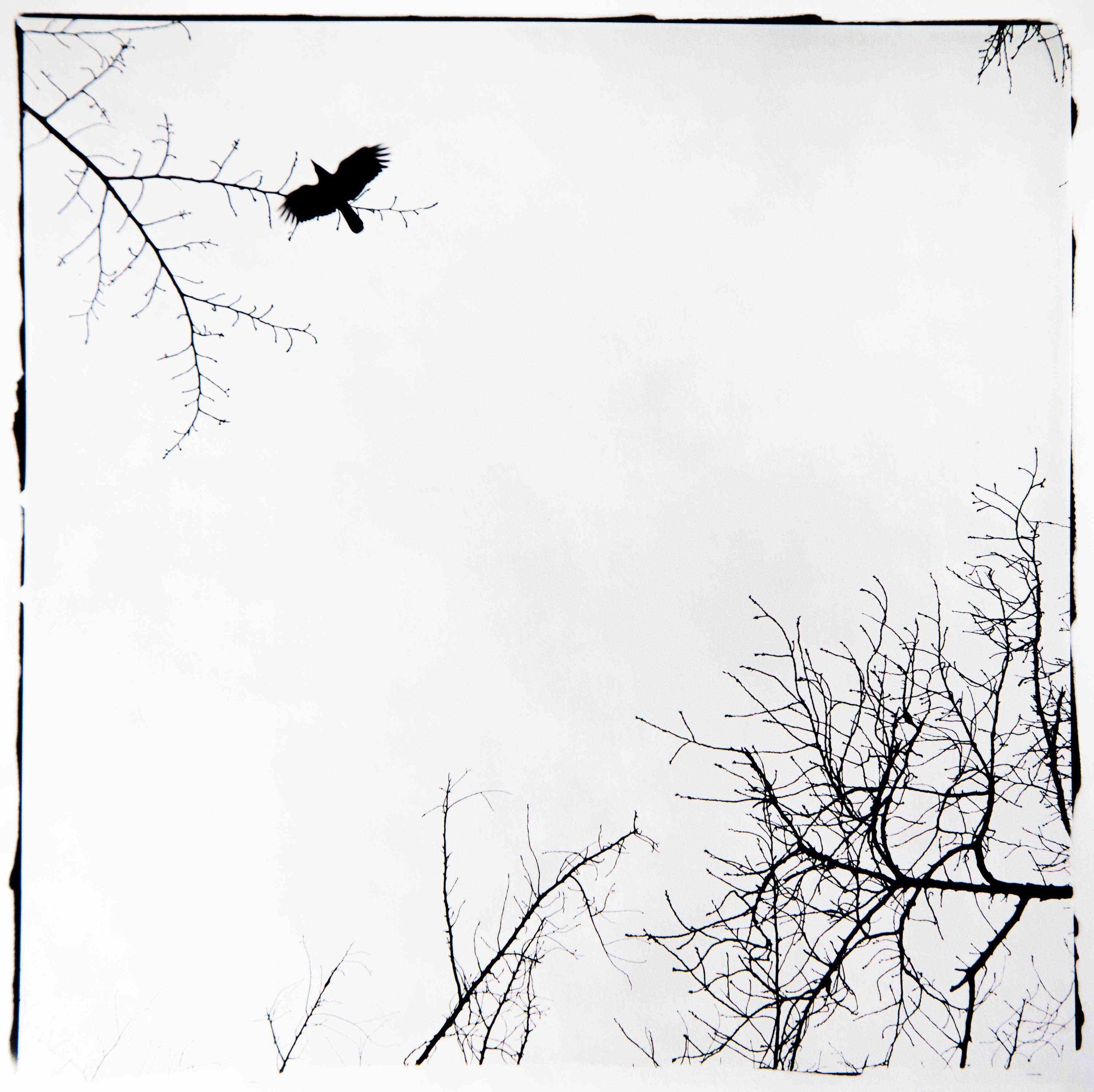 raven copy.jpg