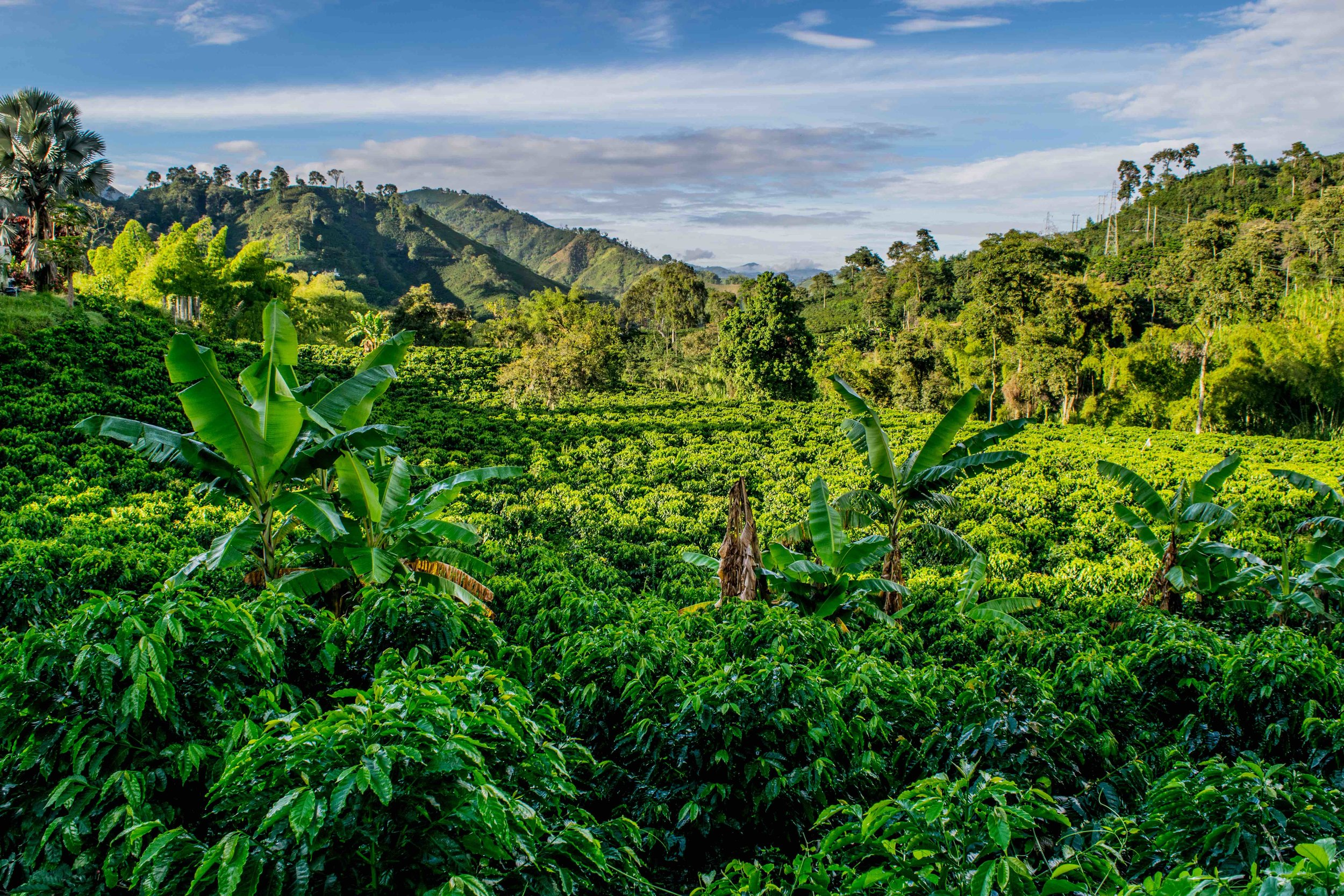 The country's coffee region provides not only great beans, but stunning scenery. Photo courtesy of Galavanta