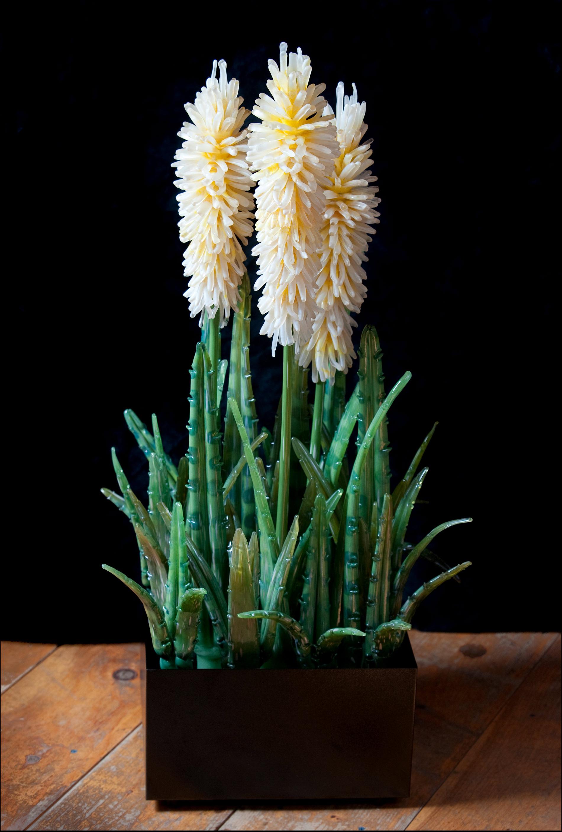 Blossoming Aloe.