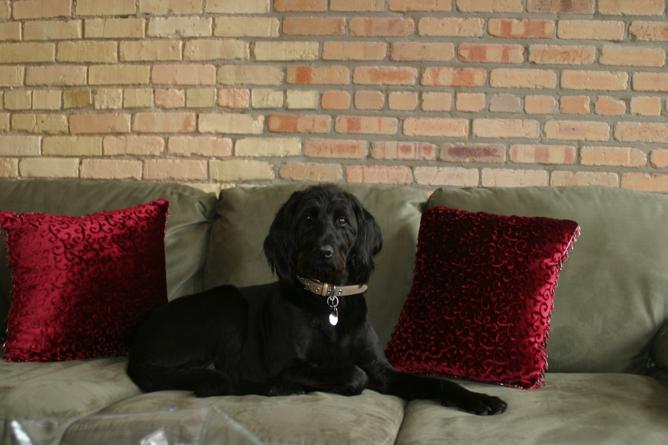 Bonnie, Edge's longest-serving canine