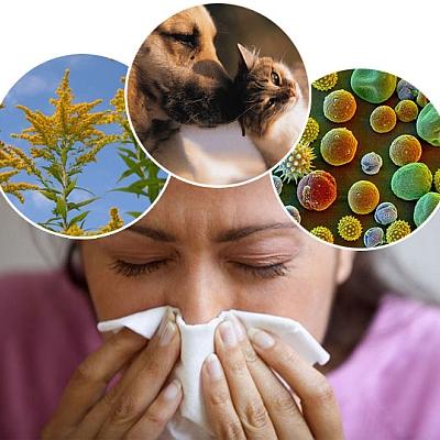 Allergies & Asthma Prevention