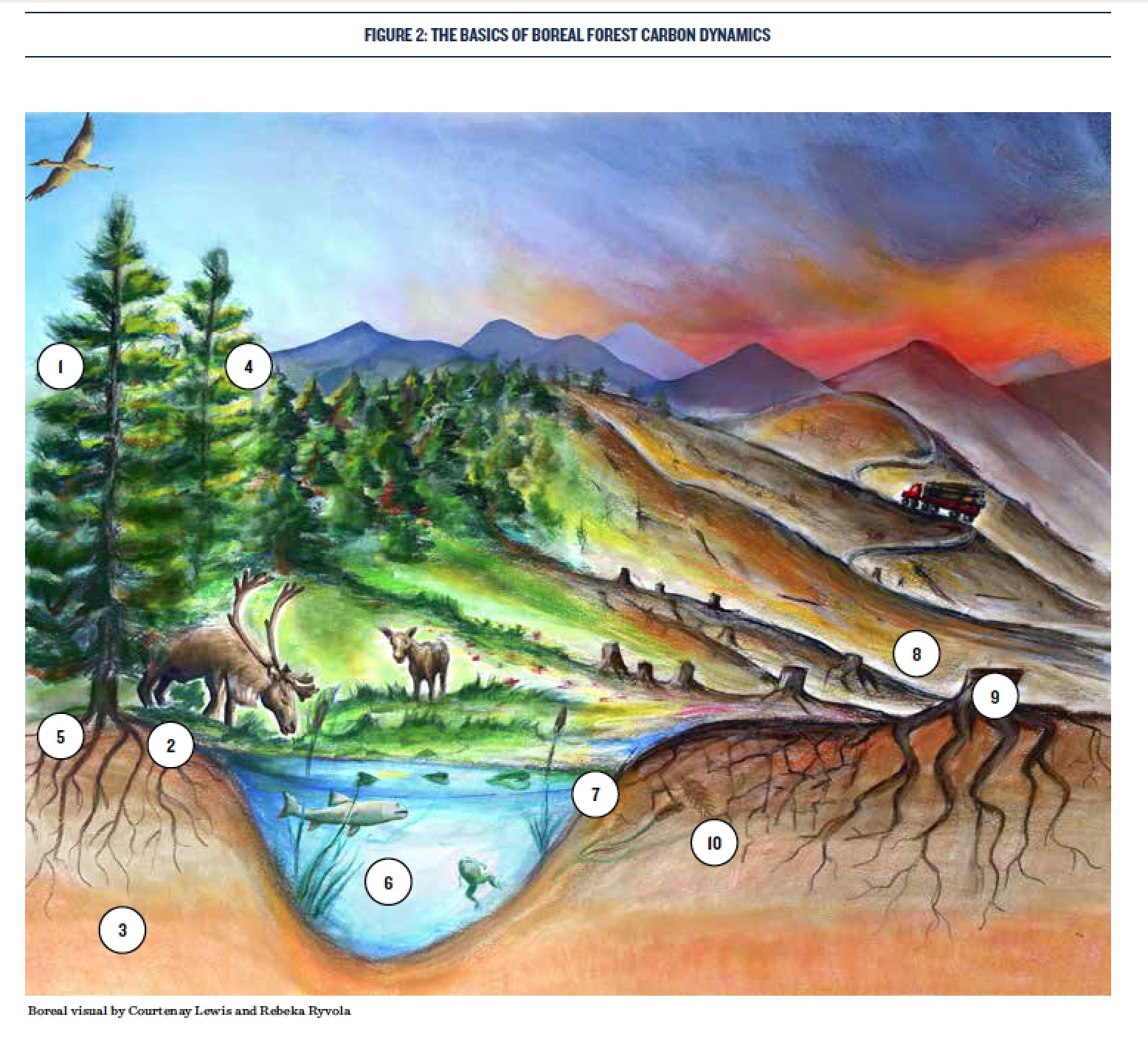 """Illustration for Natural Resources Defense Council report, """"Pandora's Box: Clearcutting in the Canadian Boreal Unleashes Millions of Tons of Previously Unaccounted Carbon Dioxide Emissions (2018)"""