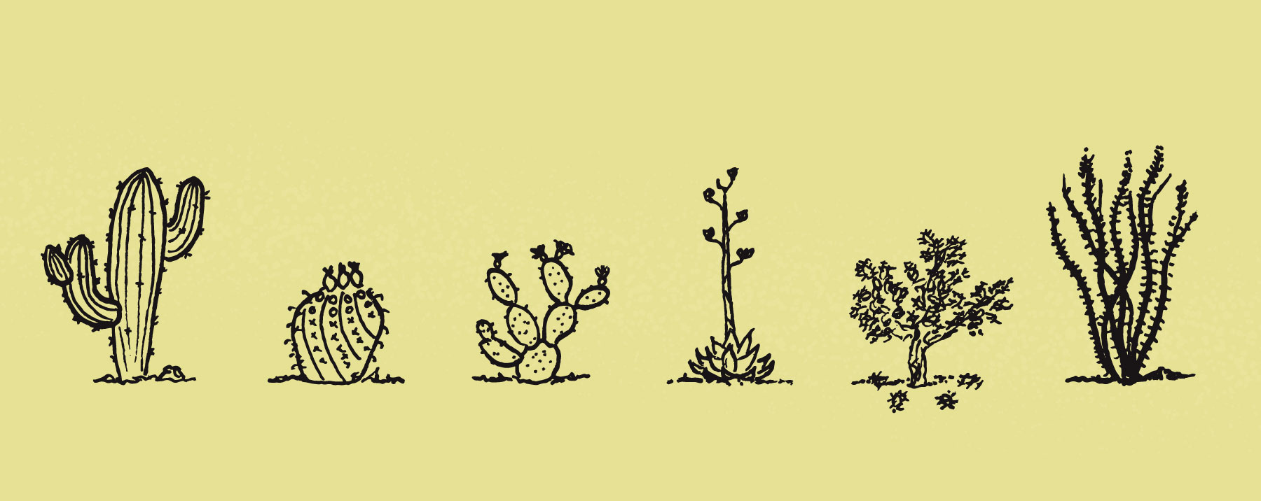 DC-cactus.jpg
