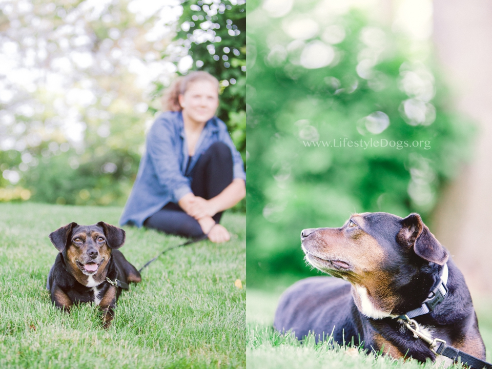 Having a great time photographing shelter dogs for  www.lifestyledogs.org  … so many lovey fur kids waiting for new homes.