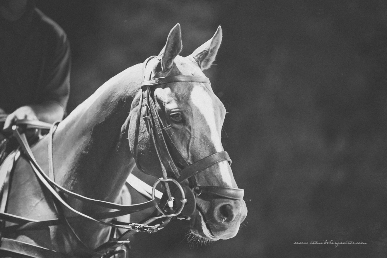 Polo Pony…