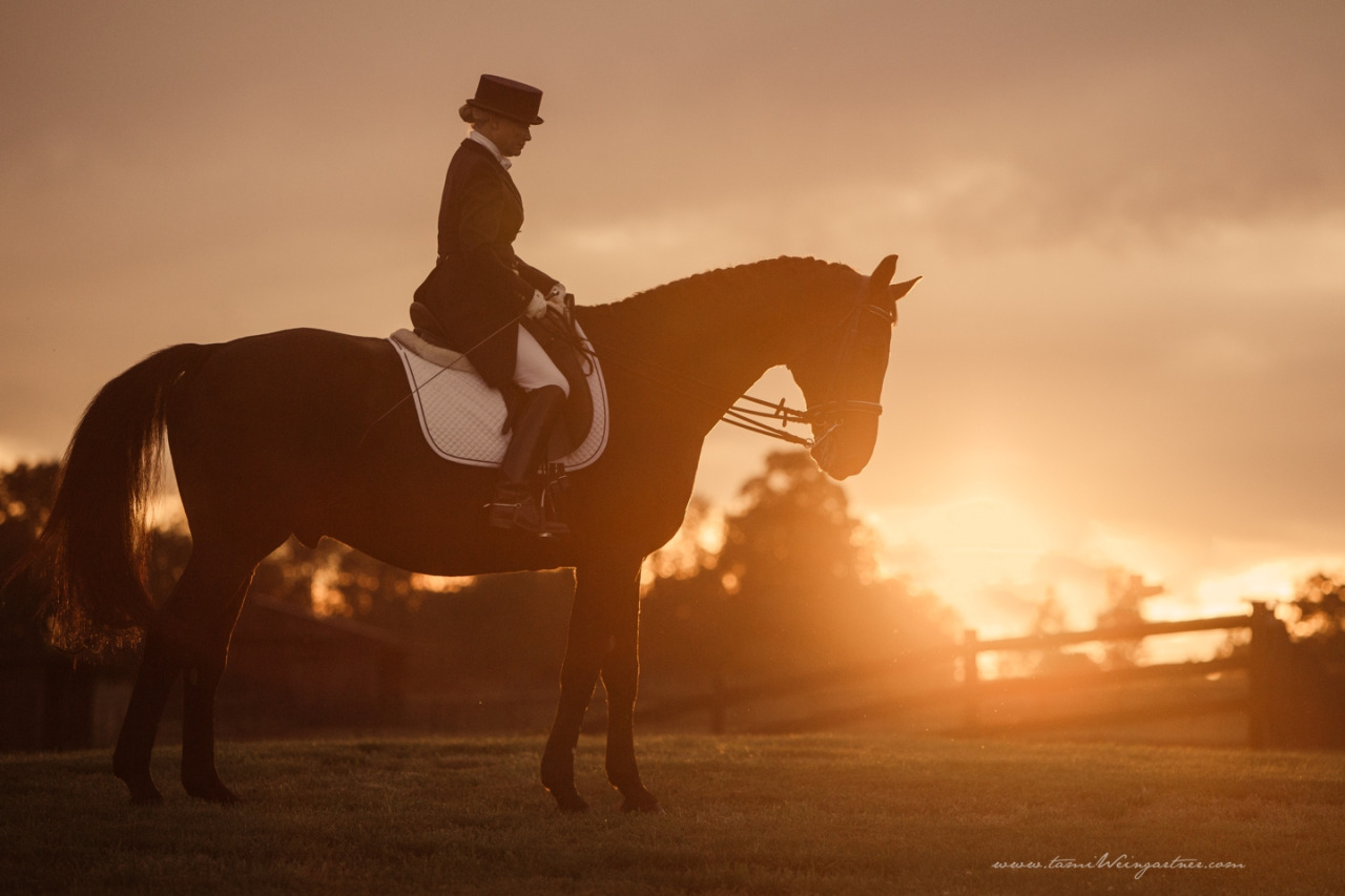 FEI Dressage Horse, Riverdance.   This session was over and we were walking back to the barn and I asked Kathy if she wouldn't mind waiting just a few more minutes for the sun to sink closer to the horizon.  She agreed and we found the perfect place to wait it out on this little knoll.  We were rewarded with one of my favorite moments from the session.