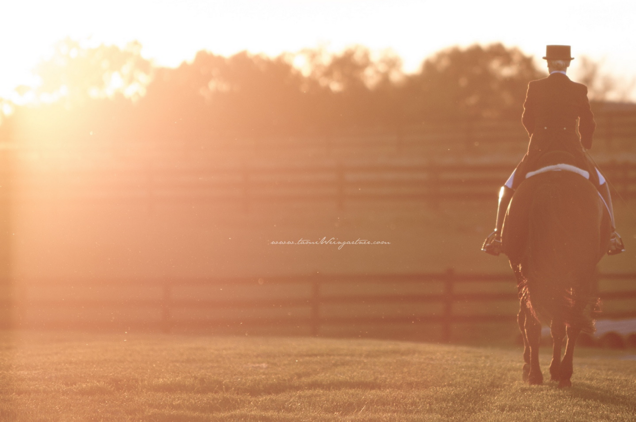 thehorselifestyle :     Captured by Tami Weingartner     Love finding my work on Tumblr….and properly credited!  Thanks so very much. XO      This was a great photography session with a lovely retired FEI horse who made it back to his original owner after a very sad set of circumstances. It was a fitting end to a beautiful session.