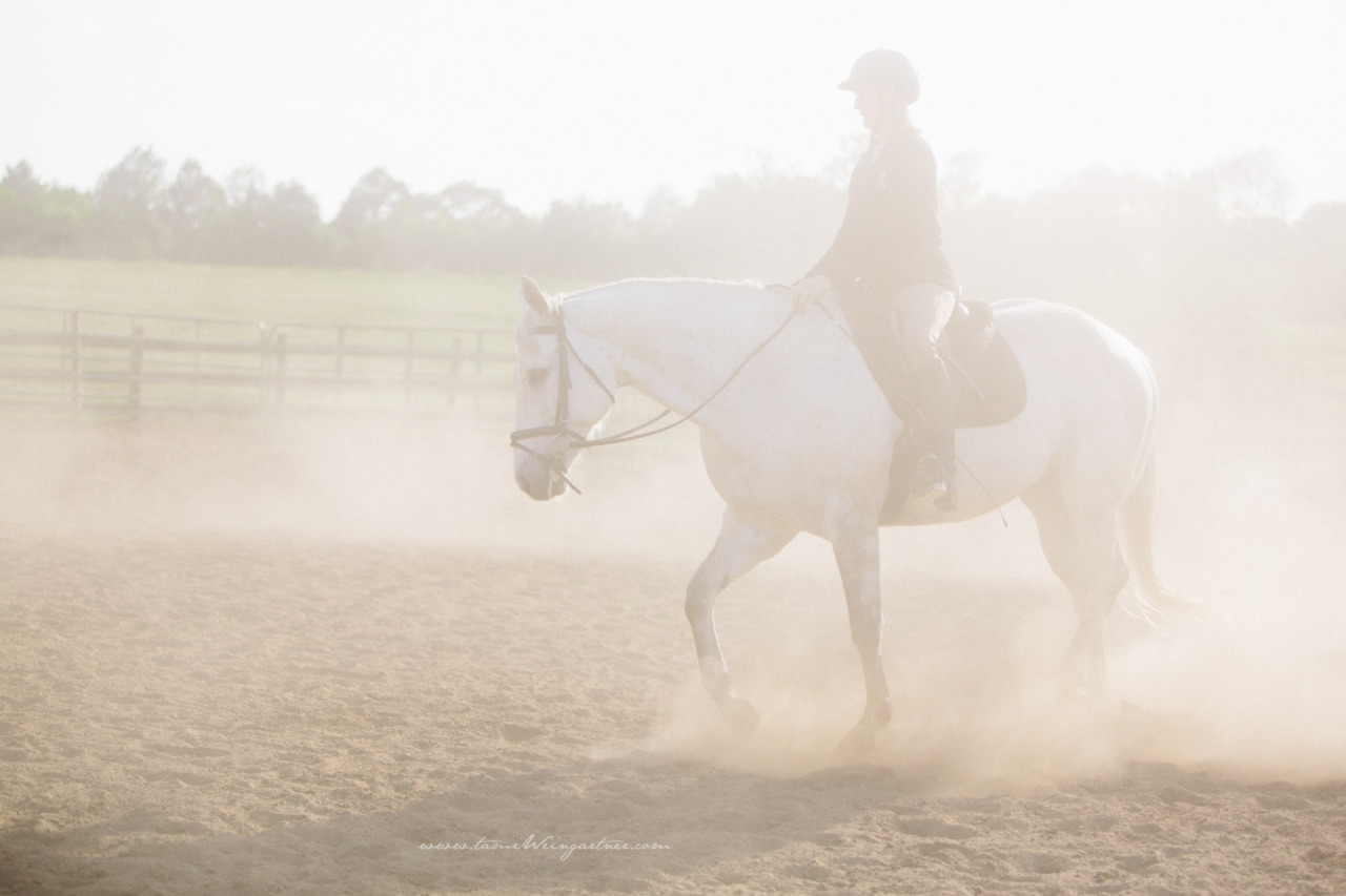 A dusty summer day in the dressage school.