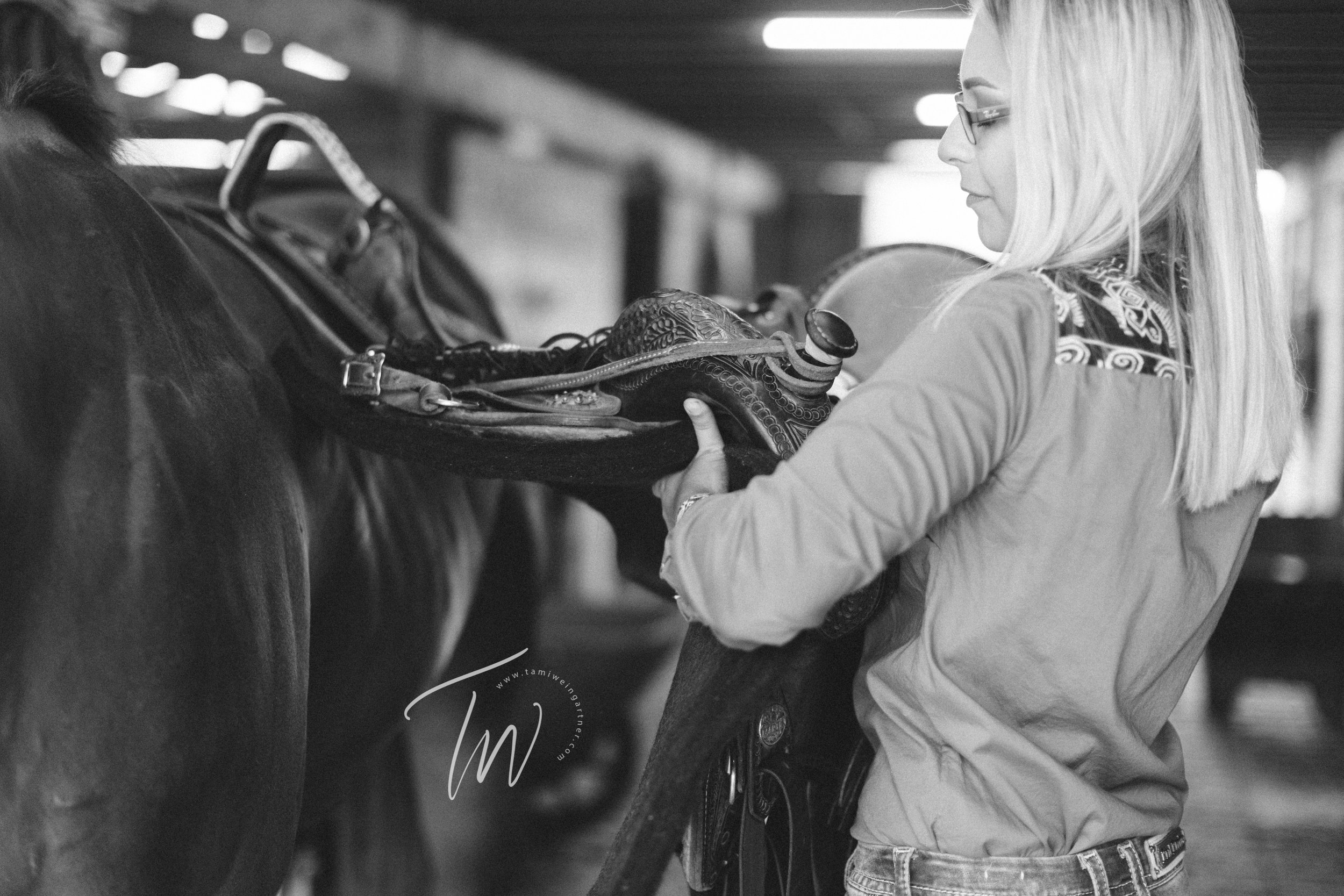 Unsaddling of barrel horse in a barn aisle by blonde horsewoman