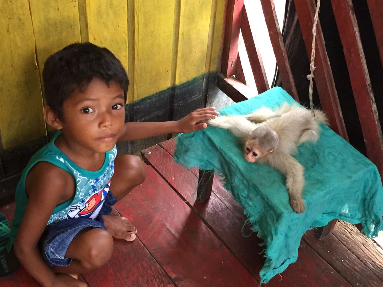 A small boy in eirunepe has a pet uakari.