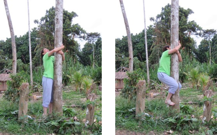 Laura makes the first move to climb an açai palm.    Looking good! With a cloth around my feet, have a good grip...and this is as high as I got!