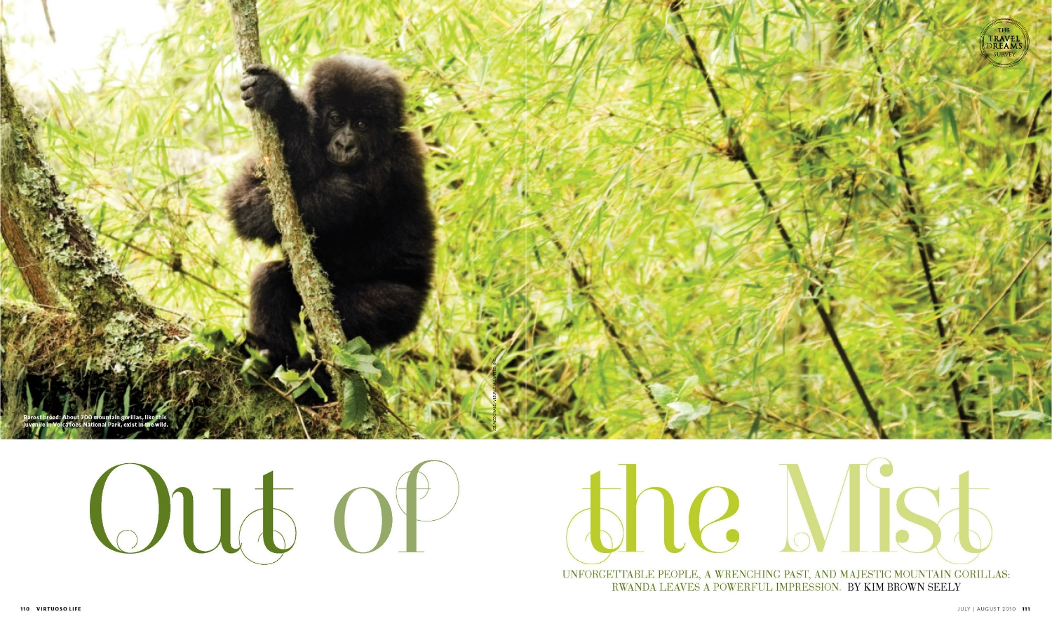 09_virtuosolife_20100708 - Out of the Mist_cover.jpg