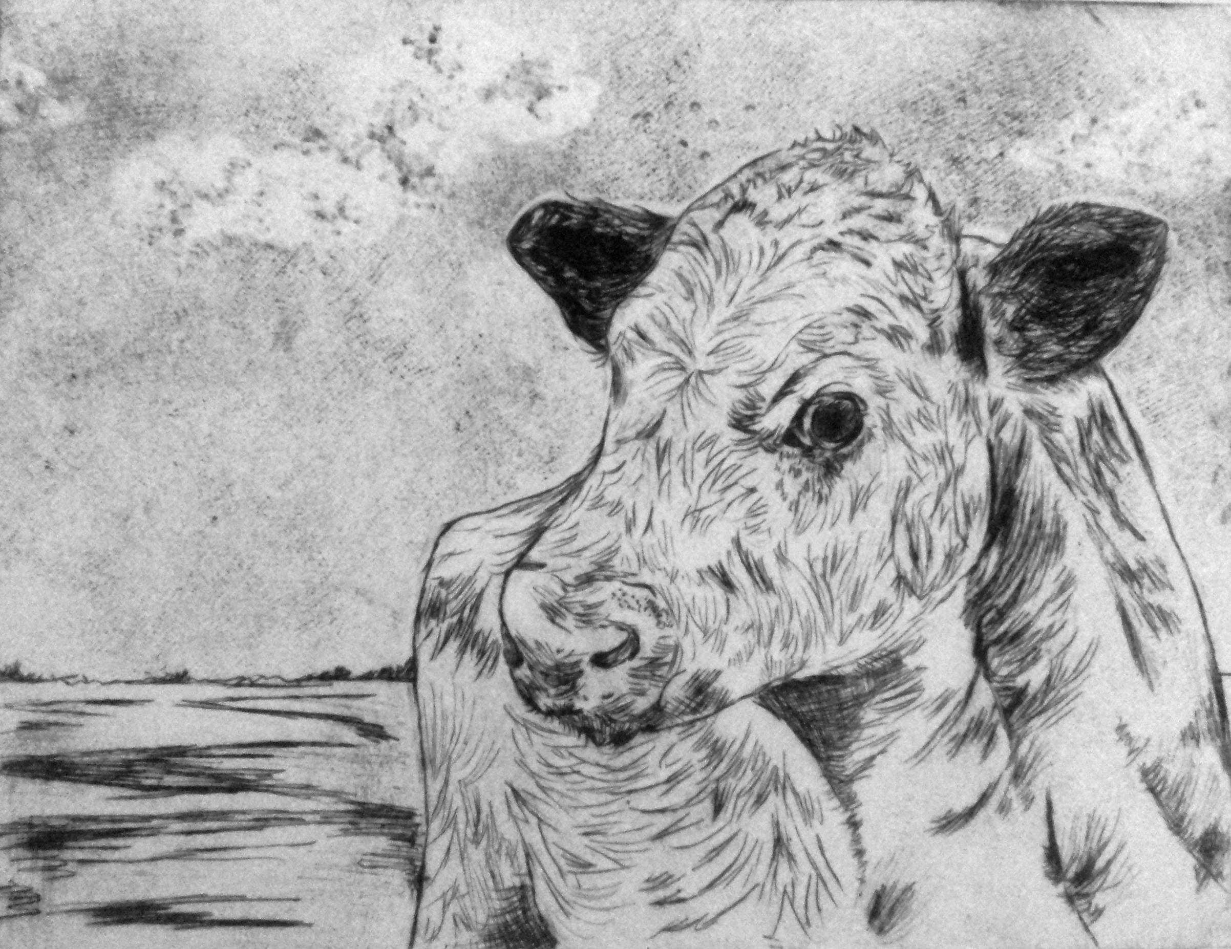 Moody Cow (printmaking) - Sandy Li