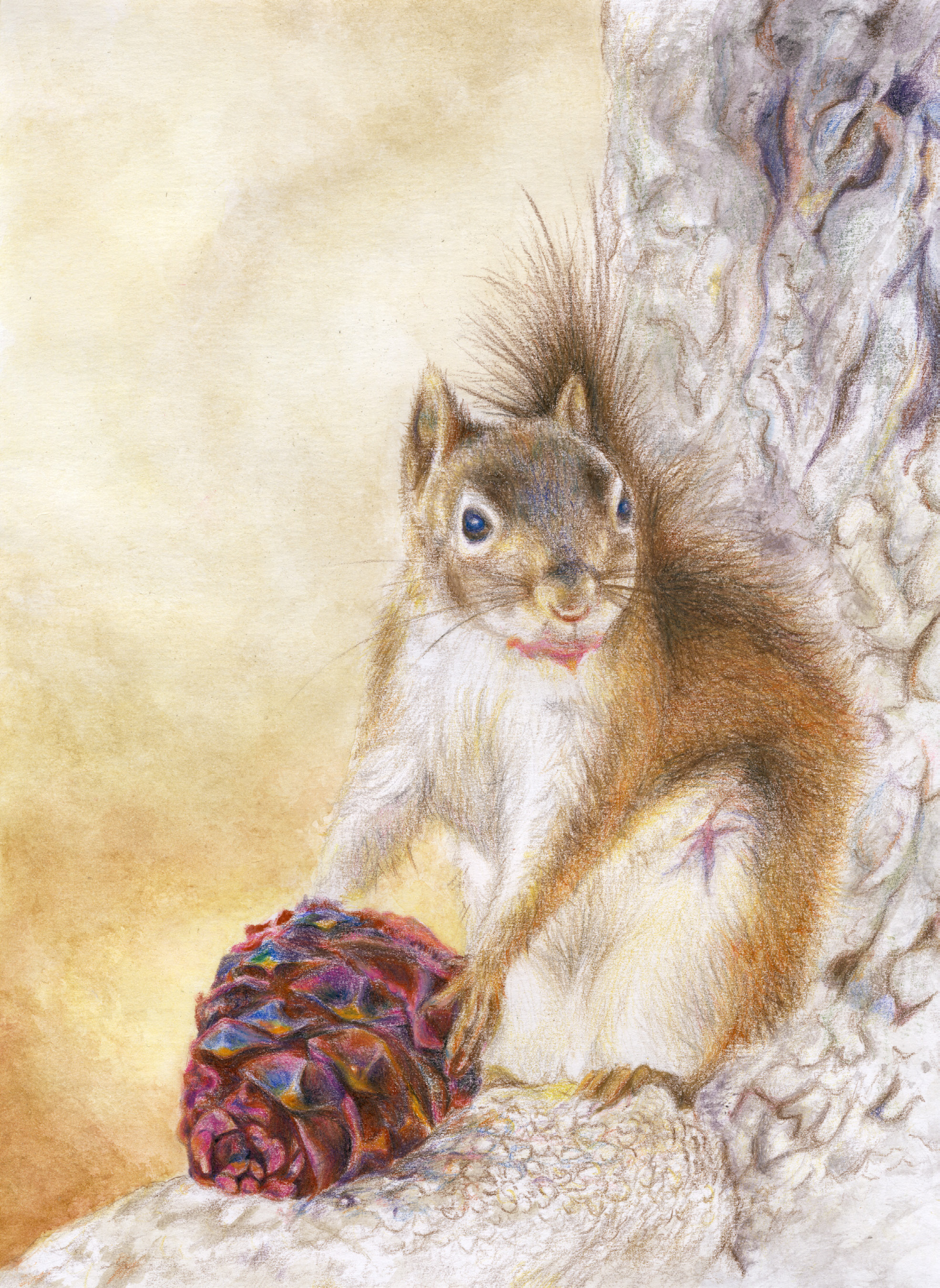 Squirrel and Red Pine Cone (colored pencil) - Sandy Li & Christine Yao