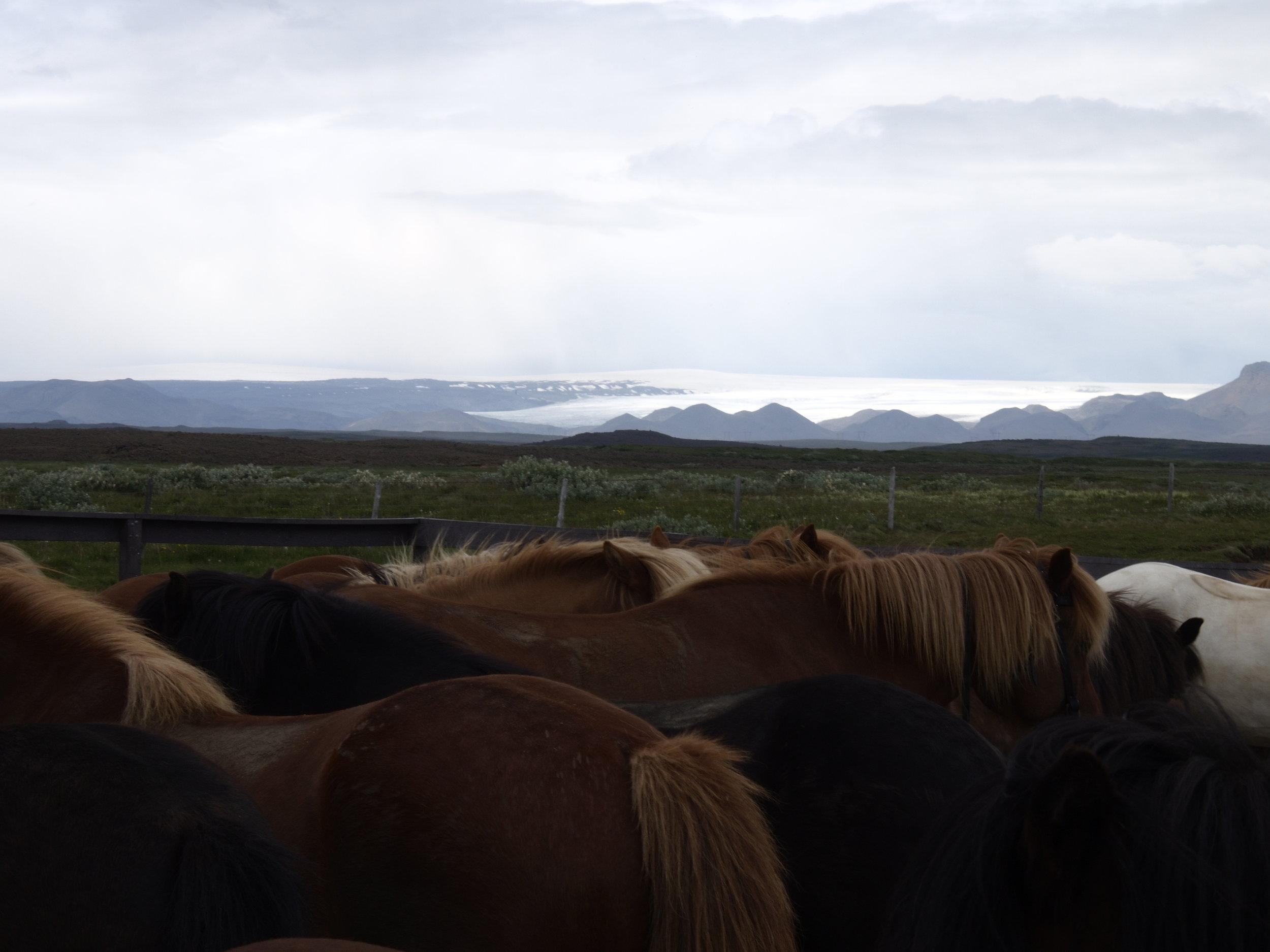 Icelandic Ponies - Lucas Fried