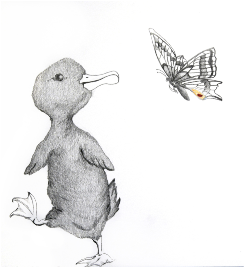 Duck and Butterfly (graphite) - Alicia Kaneb