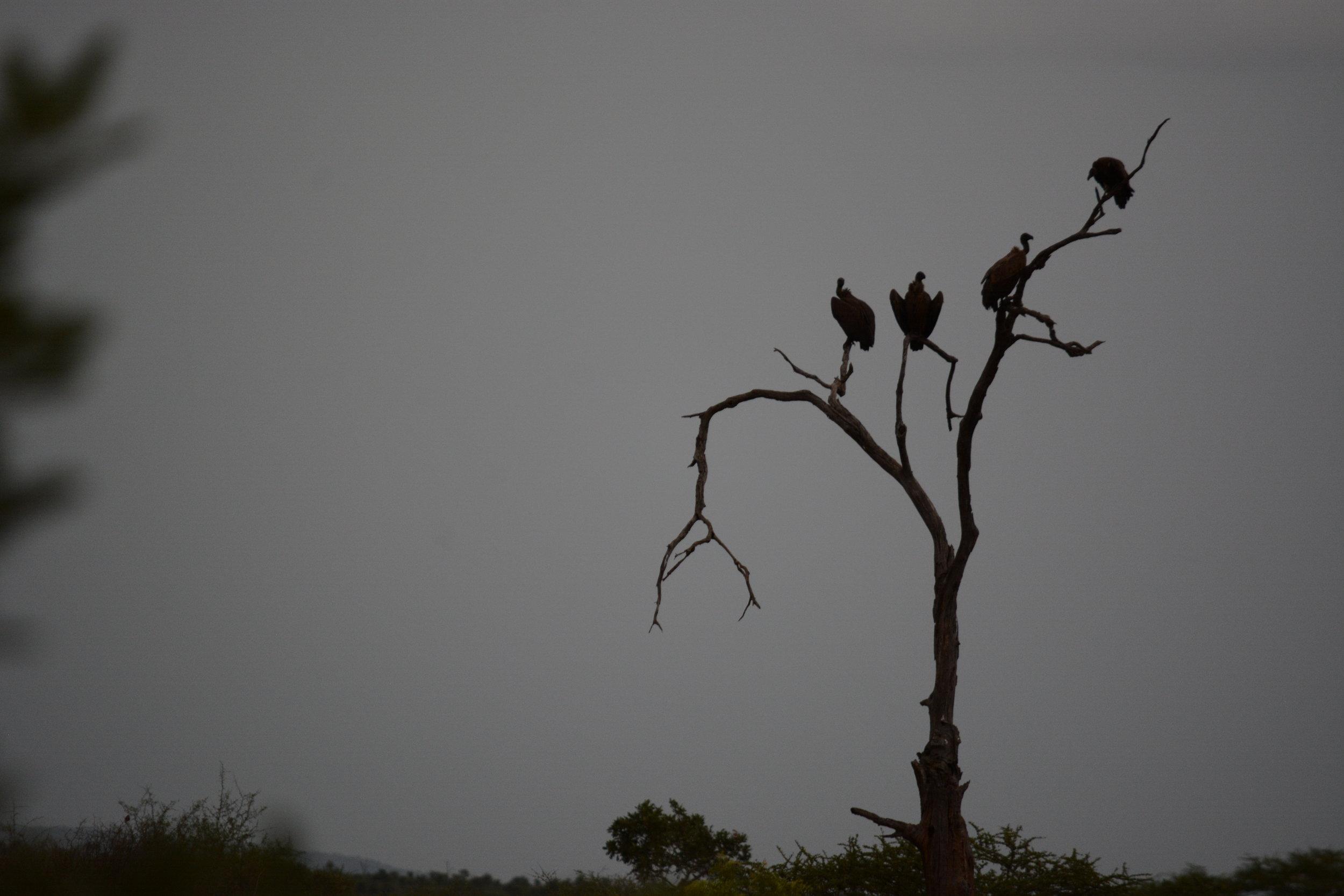 Vultures - Alex Lichtenberger