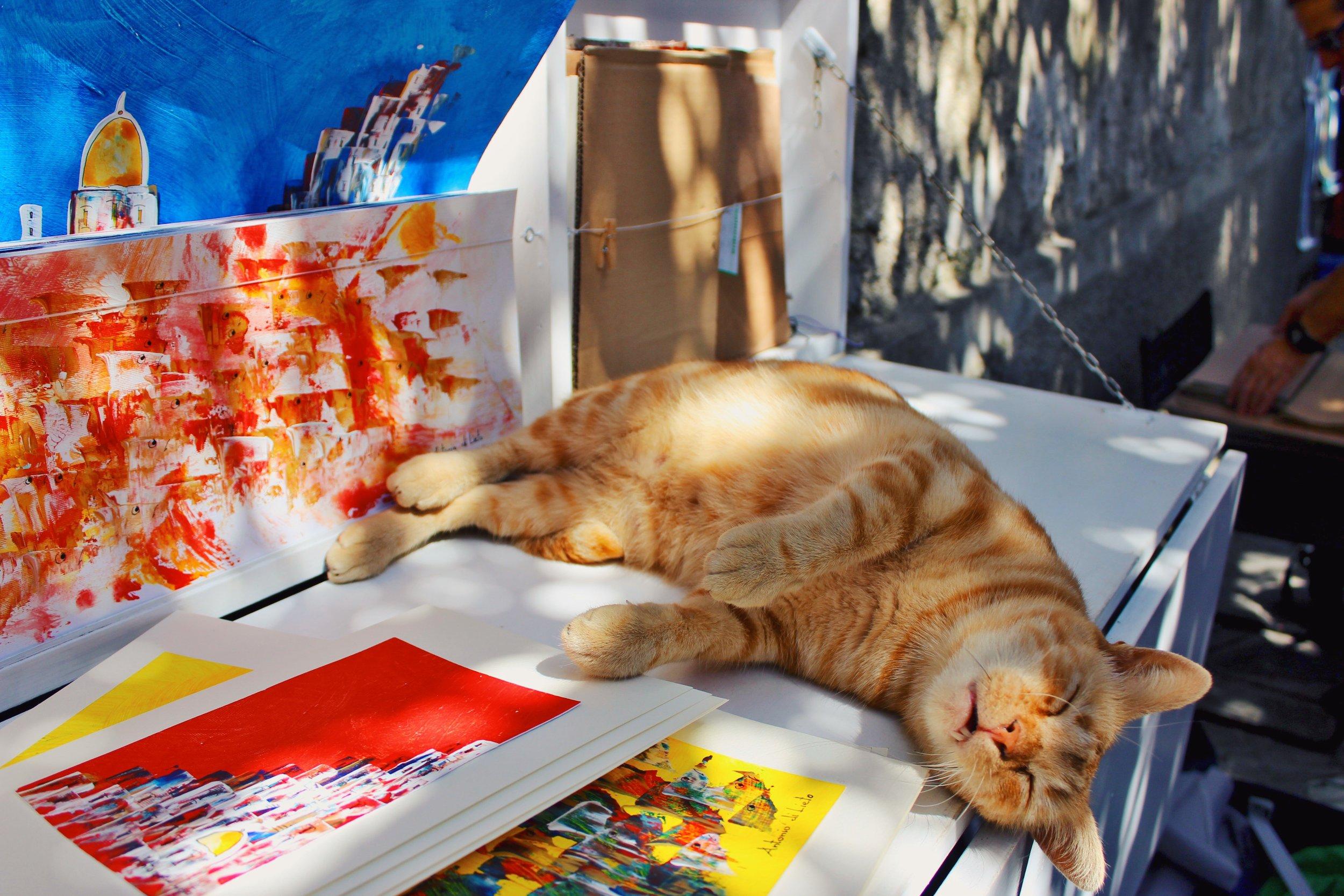 Cat Nap - Annabel Kiley