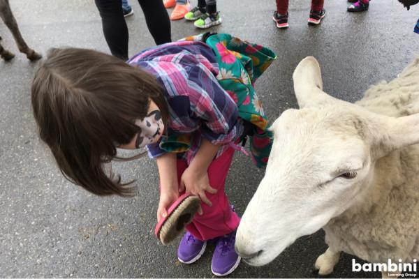 petting-zoo (1).jpg