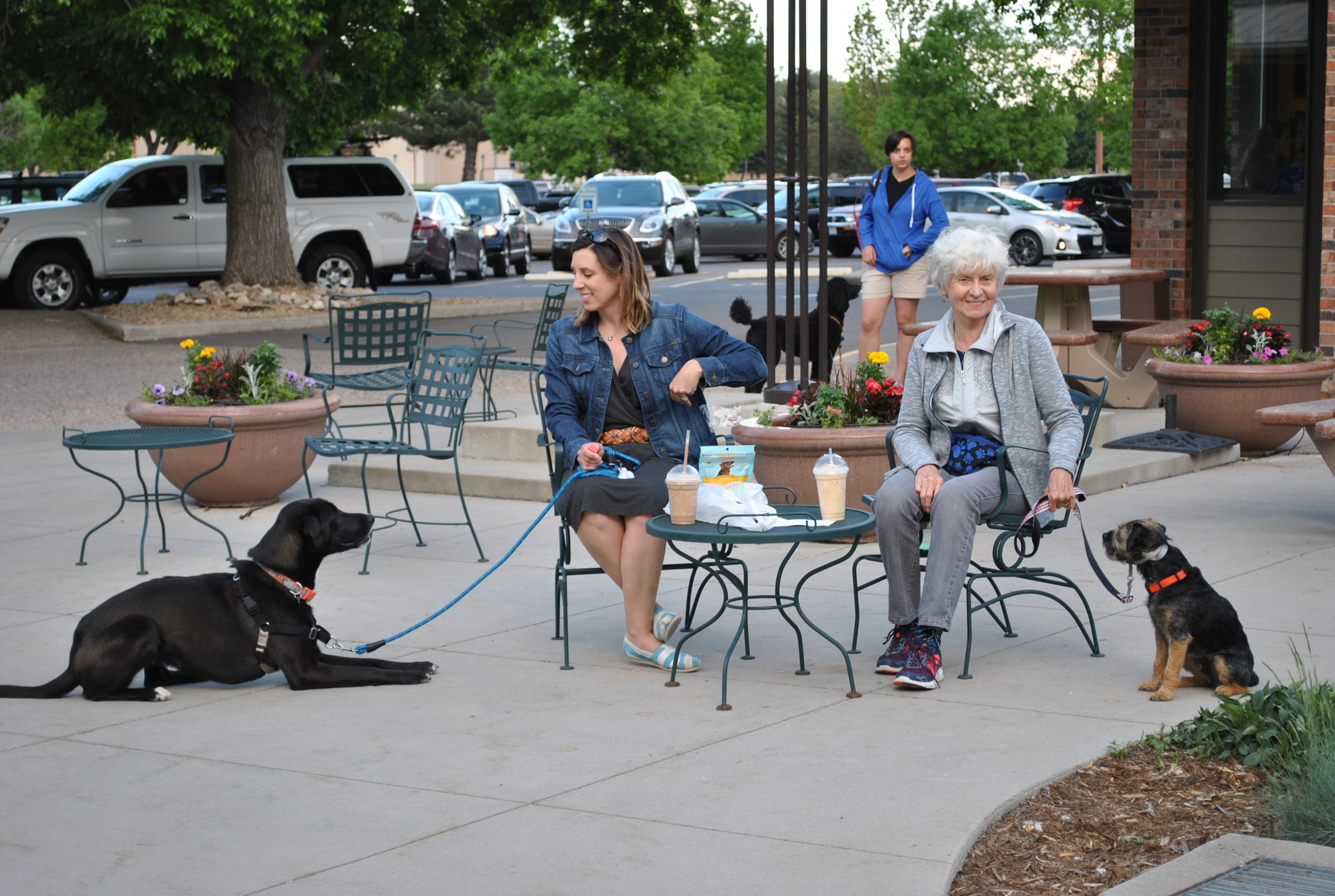 Dog Training at a local Fort Collins shopping plaza