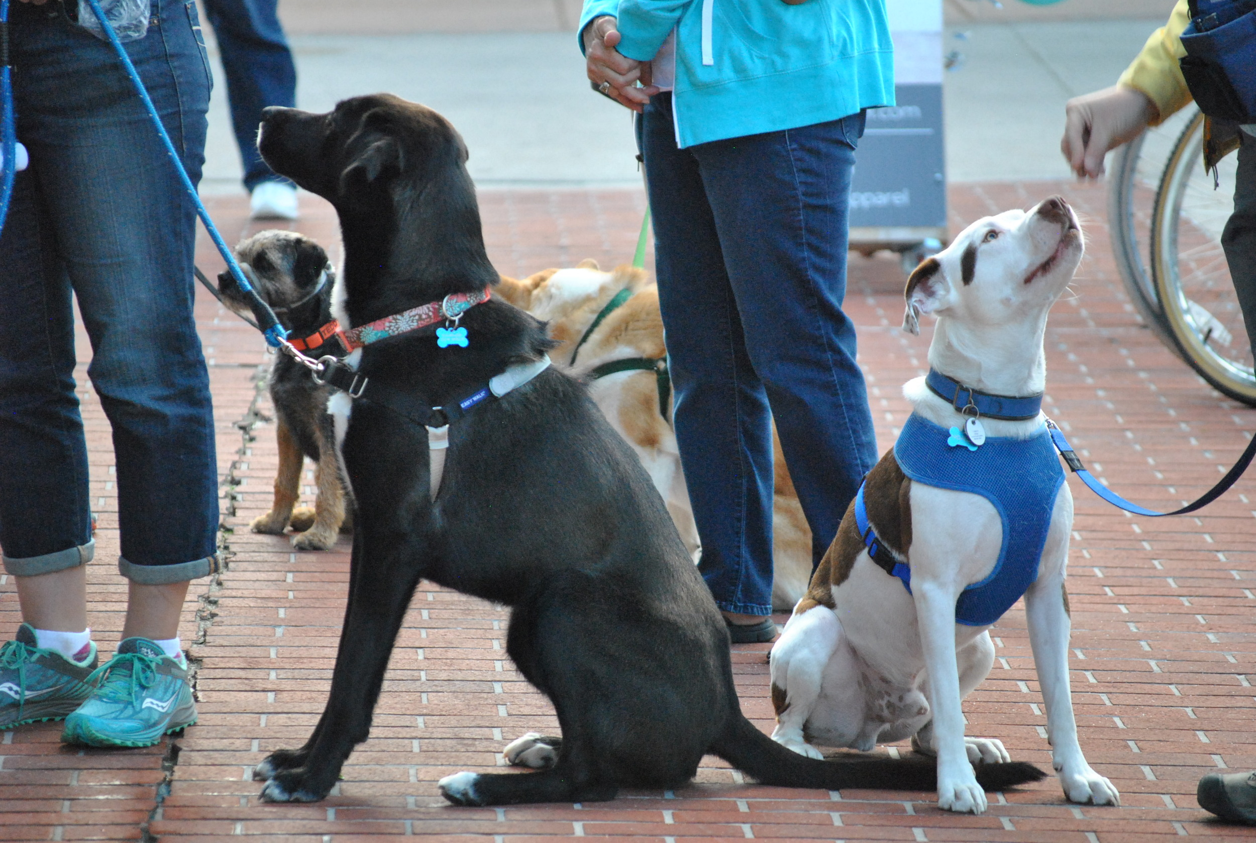 Focused dogs are determined to earn rewards no matter what the distraction