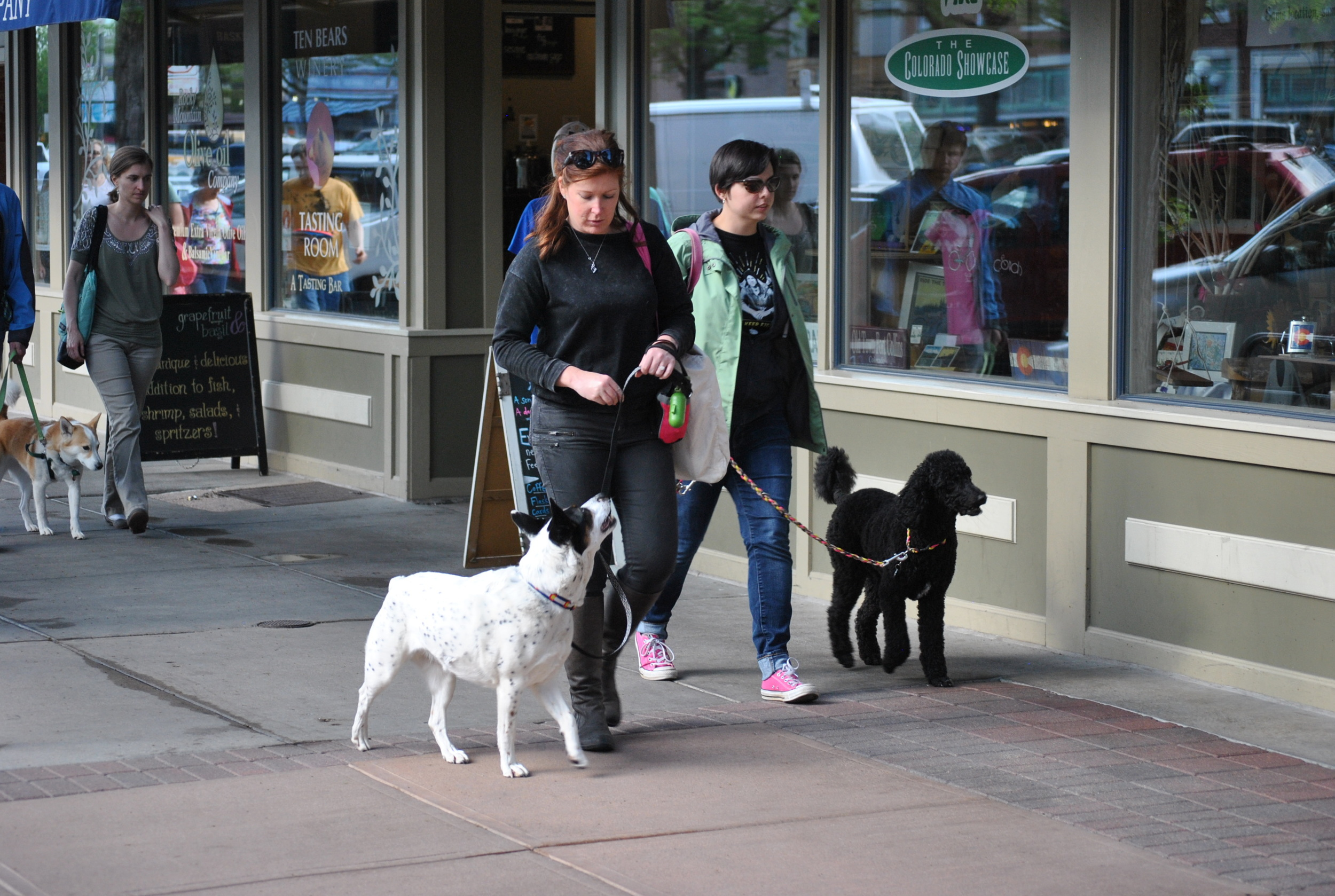 Fort Collins group dog training class