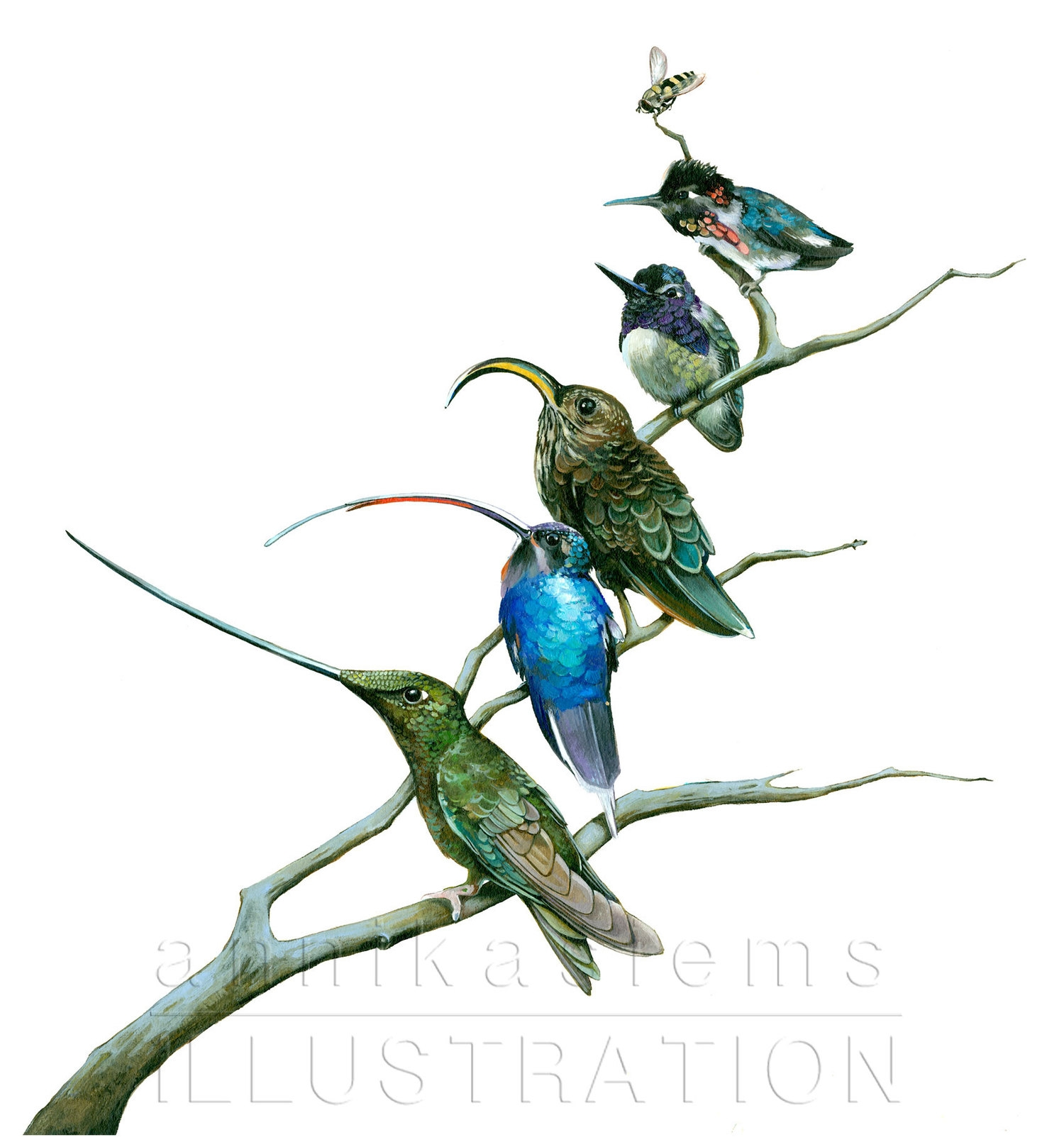 Hummingbirds have a large number of different beak shapes. Each species is adapted to specific plants.