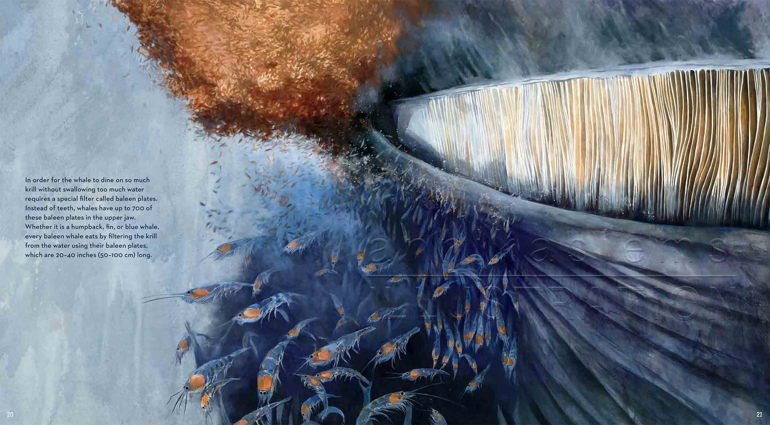 20-21deep-sea-Englisch-bluewhale-krill-©annikasiems-plankton_deepsea-zooplankton.jpg