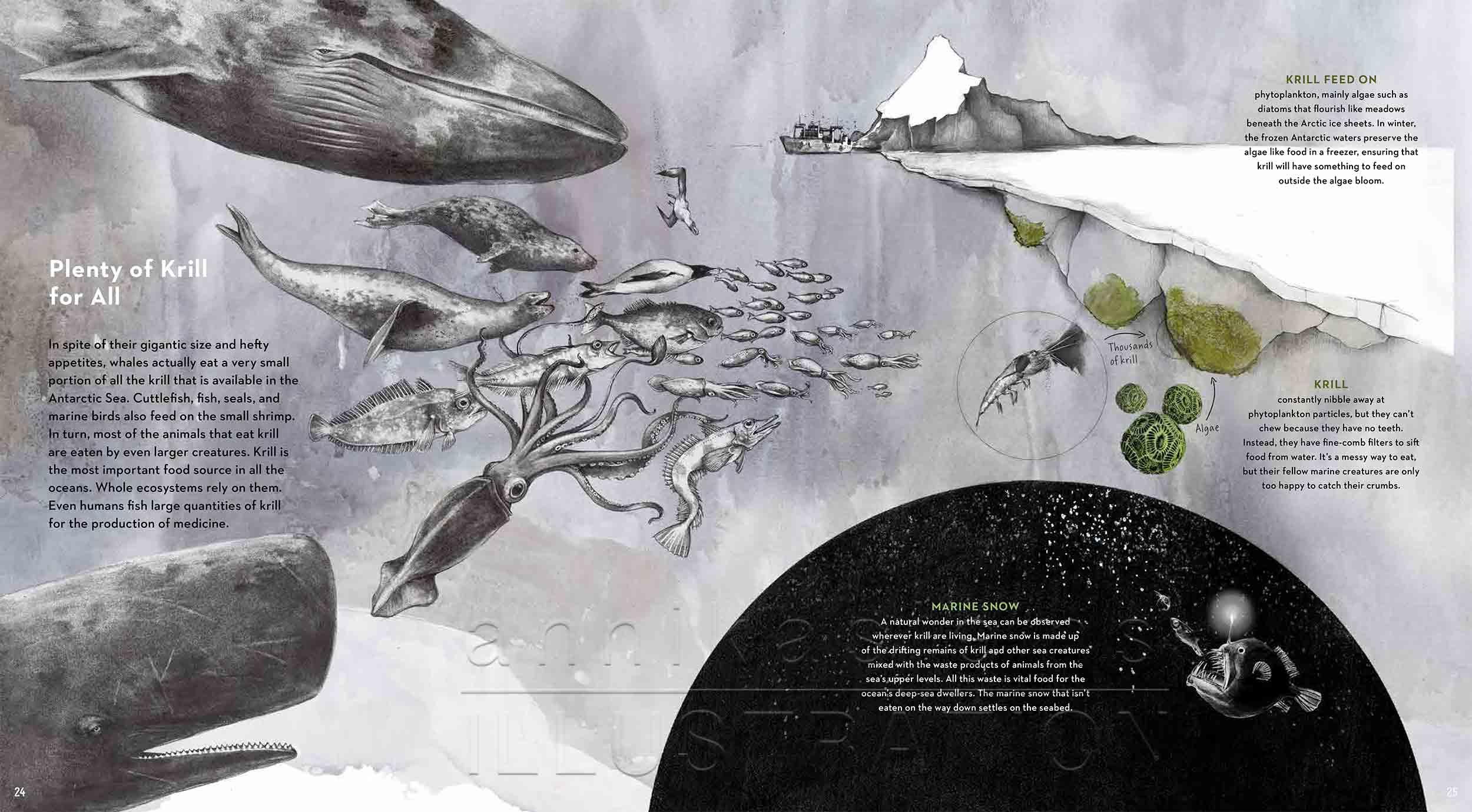24-25-deep-sea-Englisch-infografic-foochain-krill-©annikasiems-plankton_deepsea-zooplankton.jpg