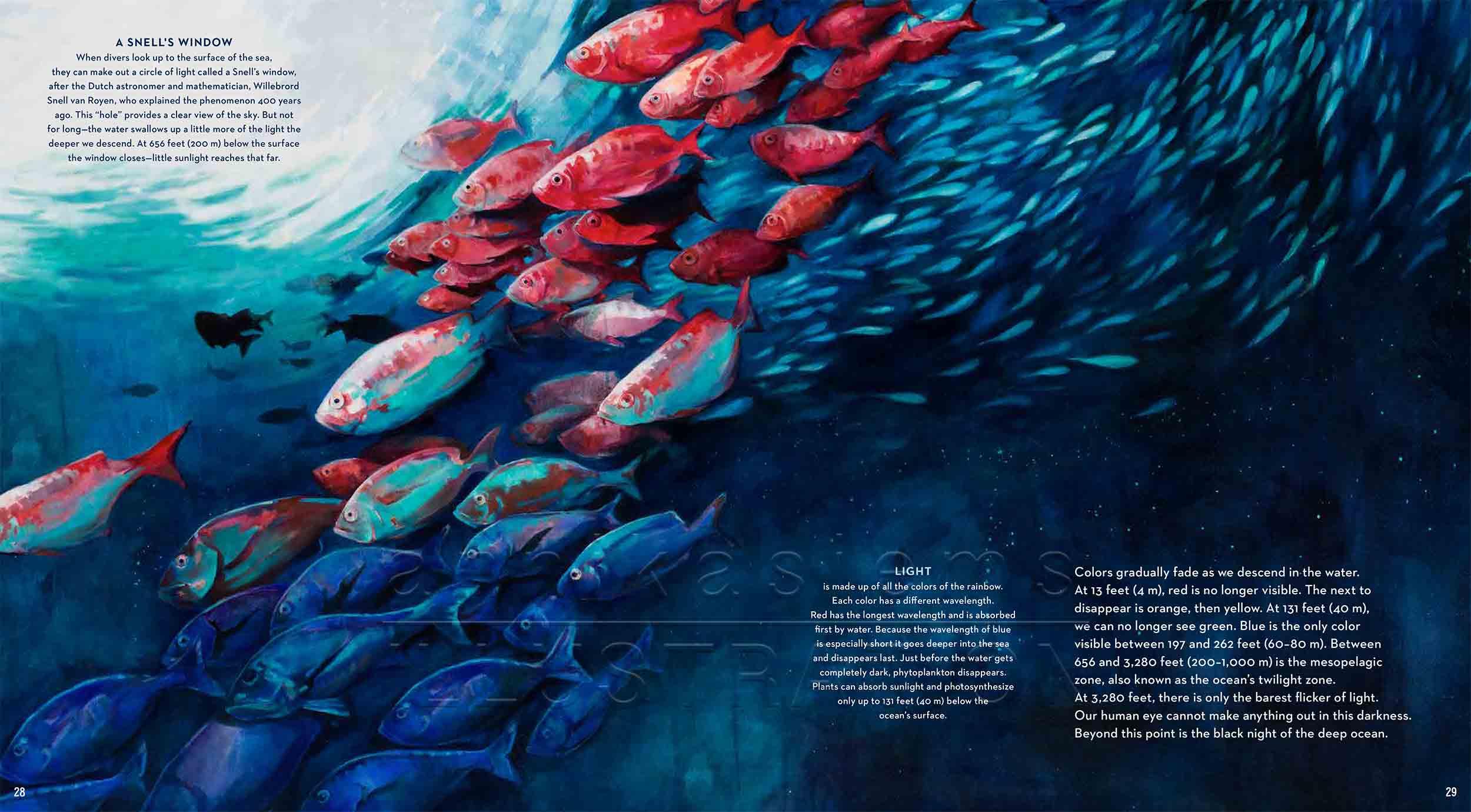 28-29-farbreduktion-fish-deep-sea-Englisch-submersible-©annikasiems-plankton_deepsea-zooplankton.jpg