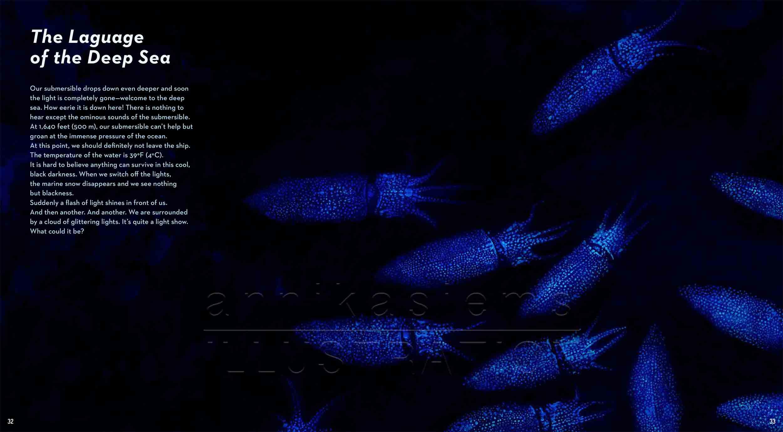 32-33-Leuchtkalmar-fireflysquid-fish-deep-sea-Englisch-submersible-©annikasiems-plankton_deepsea-zooplankton.jpg