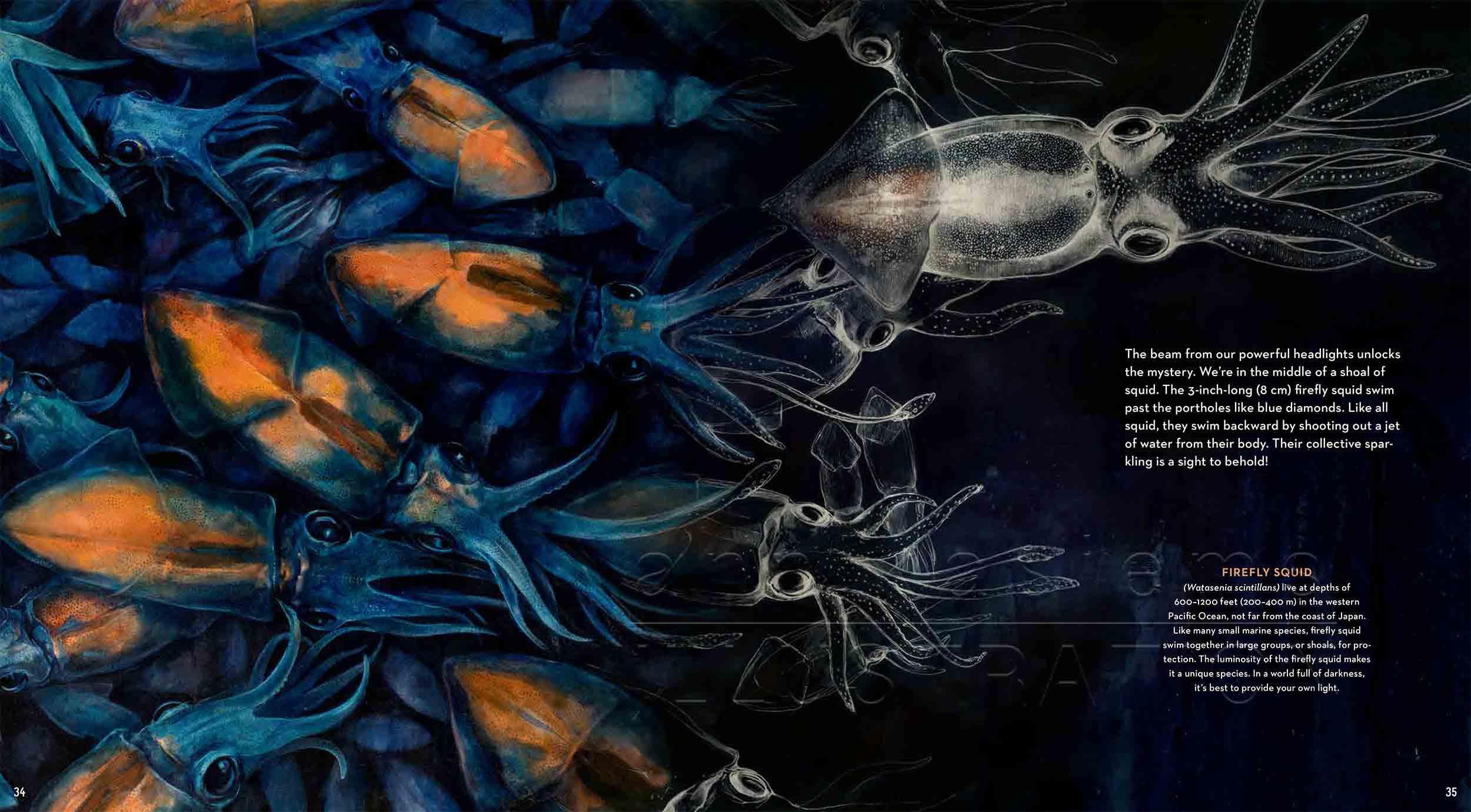 34-35-Leuchtkalmar-fireflysquidfish-fish-deep-sea-Englisch-submersible-©annikasiems-plankton_deepsea-zooplankton.jpg