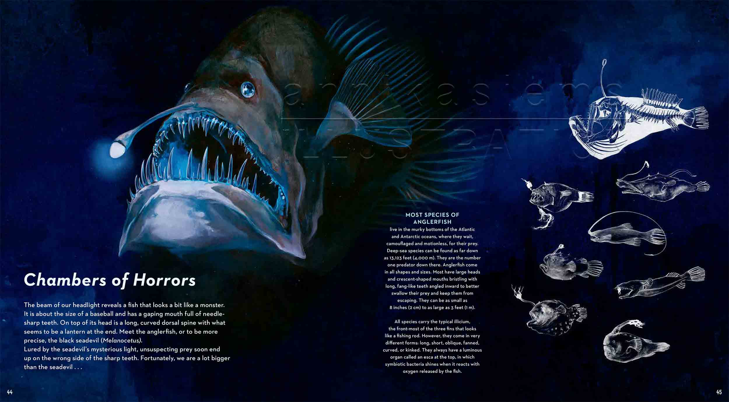 44-45-anglerfisch-lanternfish-Leuchtkalmar-fireflysquidfish-fish-deep-sea-Englisch-submersible-©annikasiems-plankton_deepsea-zooplankton.jpg