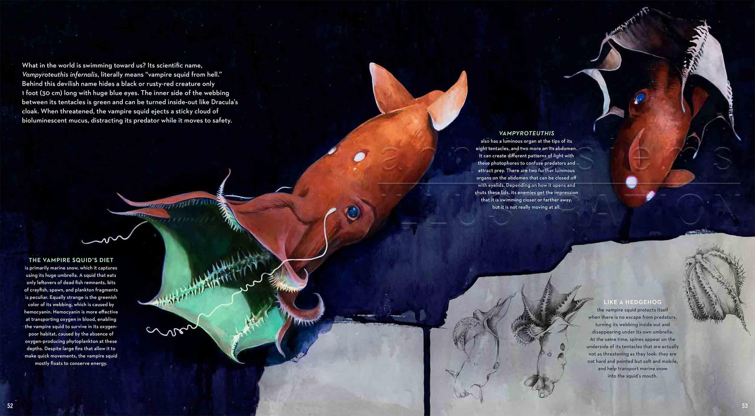 52-53vampiresquid-vampyroteuthisinfernalis-fish-deep-sea-Englisch-submersible-©annikasiems-plankton_deepsea-zooplankton.jpg