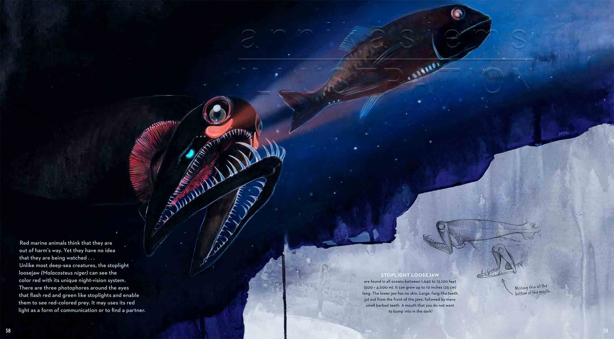 58-59dragonfish-deep-sea-Englisch-submersible-©annikasiems-plankton_deepsea-zooplankton.jpg