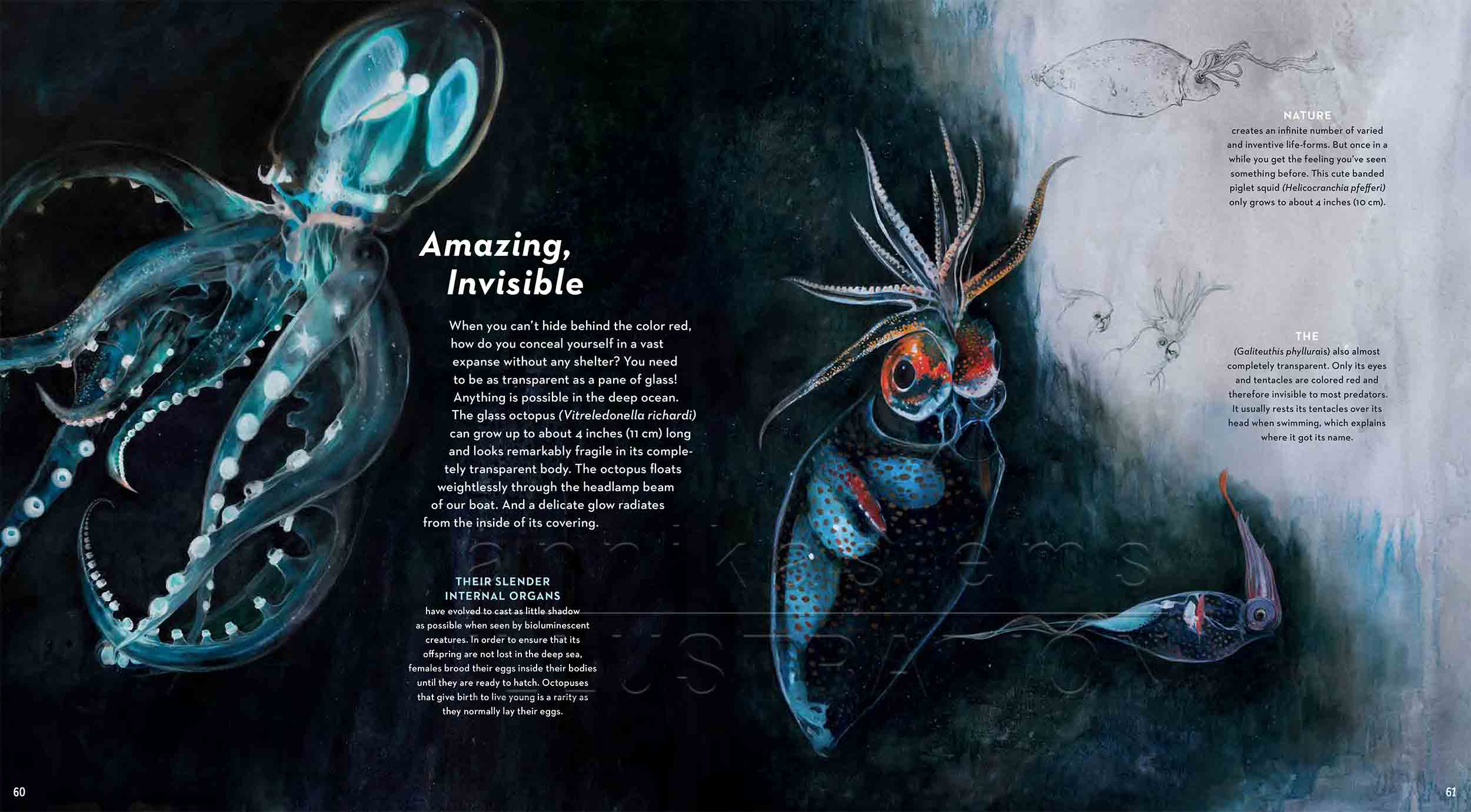 60-61-glasoctopus-cockatoo-squid-deep-sea-Englisch-submersible-©annikasiems-plankton_deepsea-zooplankton.jpg