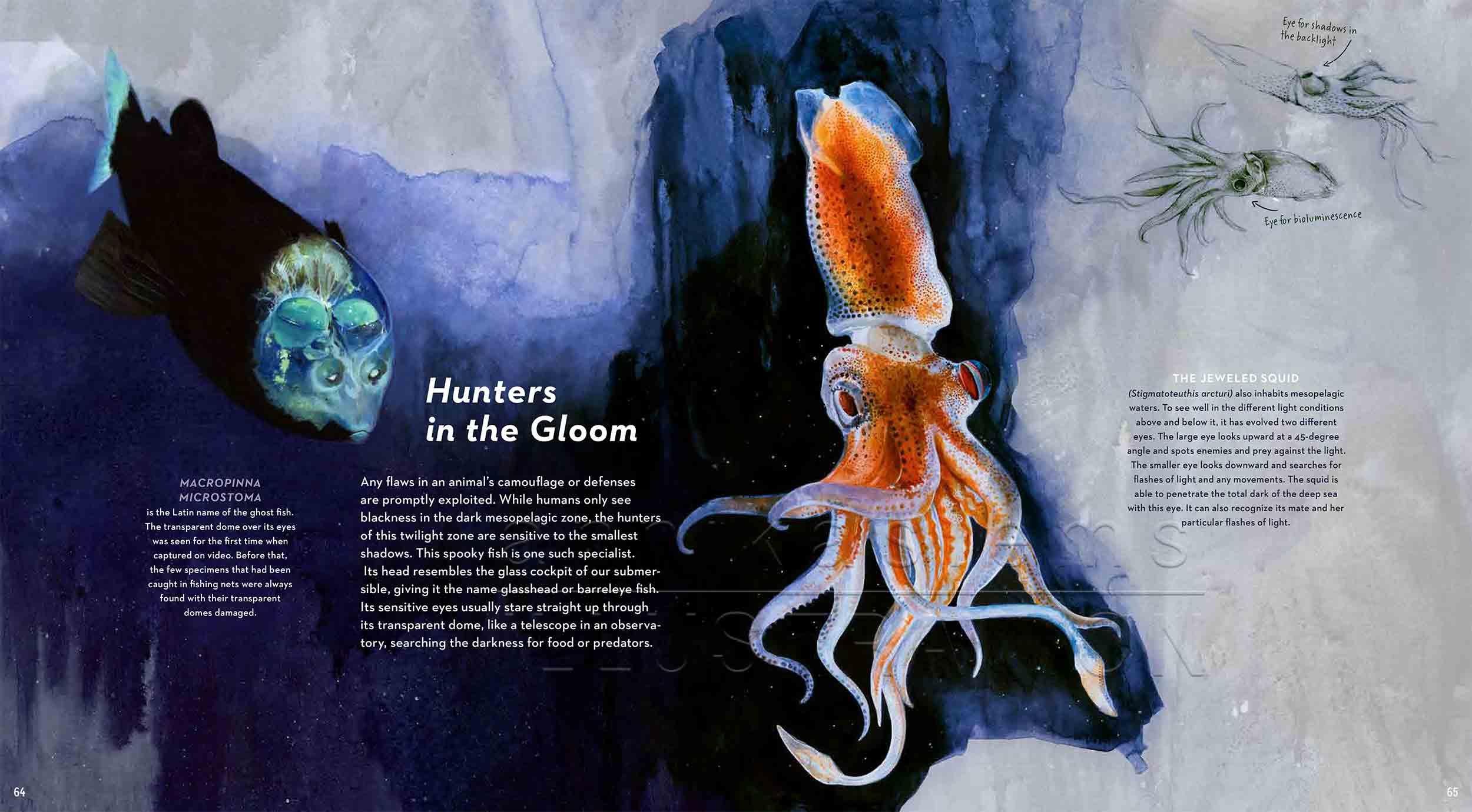 64-65Macropinnamicrostoma-jeweledsquid-deep-sea-Englisch-submersible-©annikasiems-plankton_deepsea-zooplankton.jpg