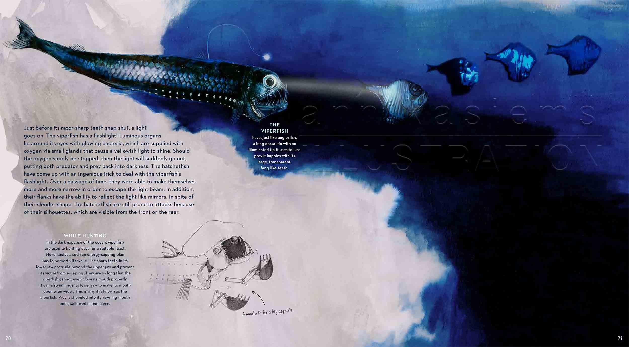70-71-hedgefish-viperfish-deep-sea-Englisch-submersible-©annikasiems-plankton_deepsea-zooplankton.jpg