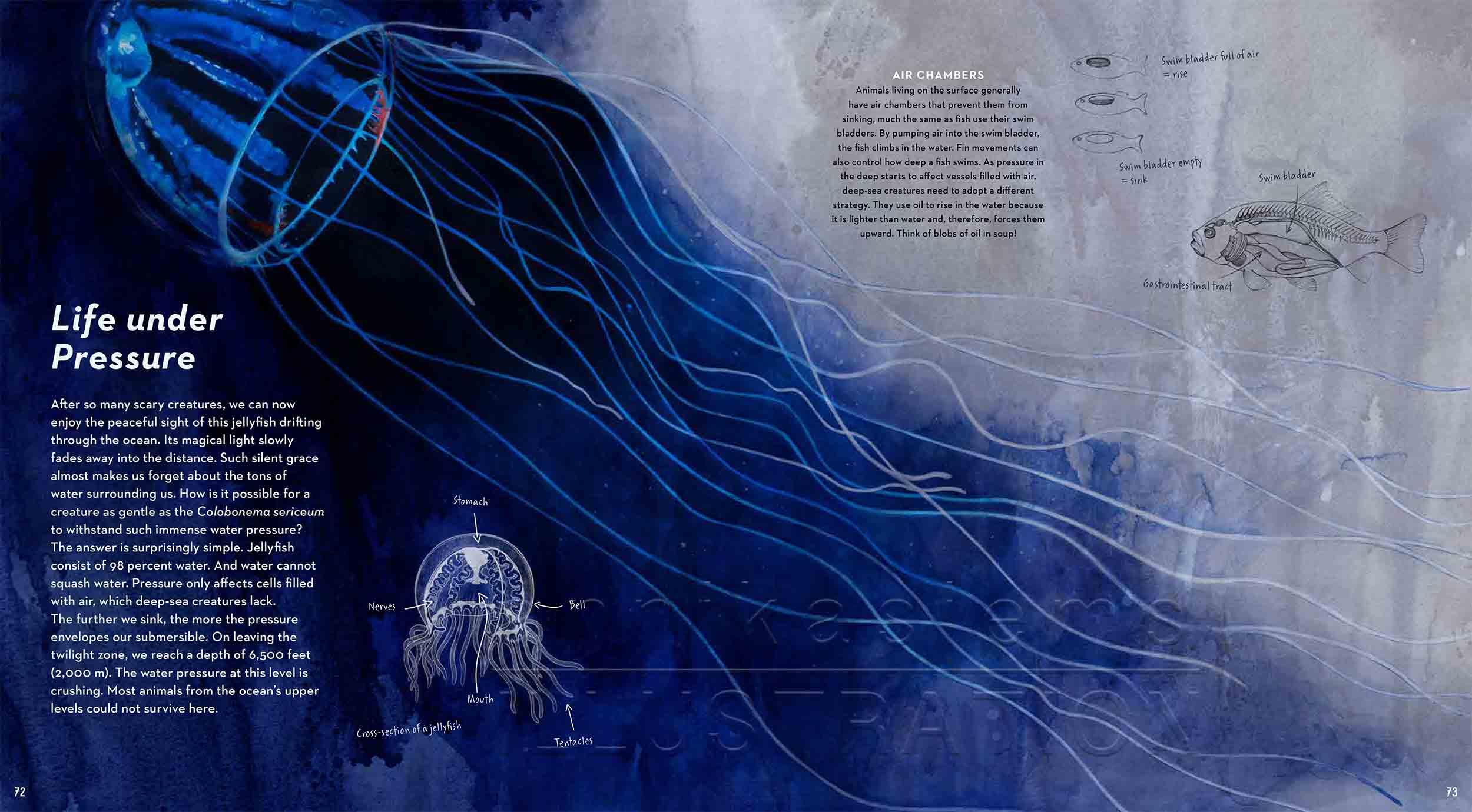 72-73-pressure-jellyfish-anatomy-deep-sea-Englisch-submersible-©annikasiems-plankton_deepsea-zooplankton.jpg