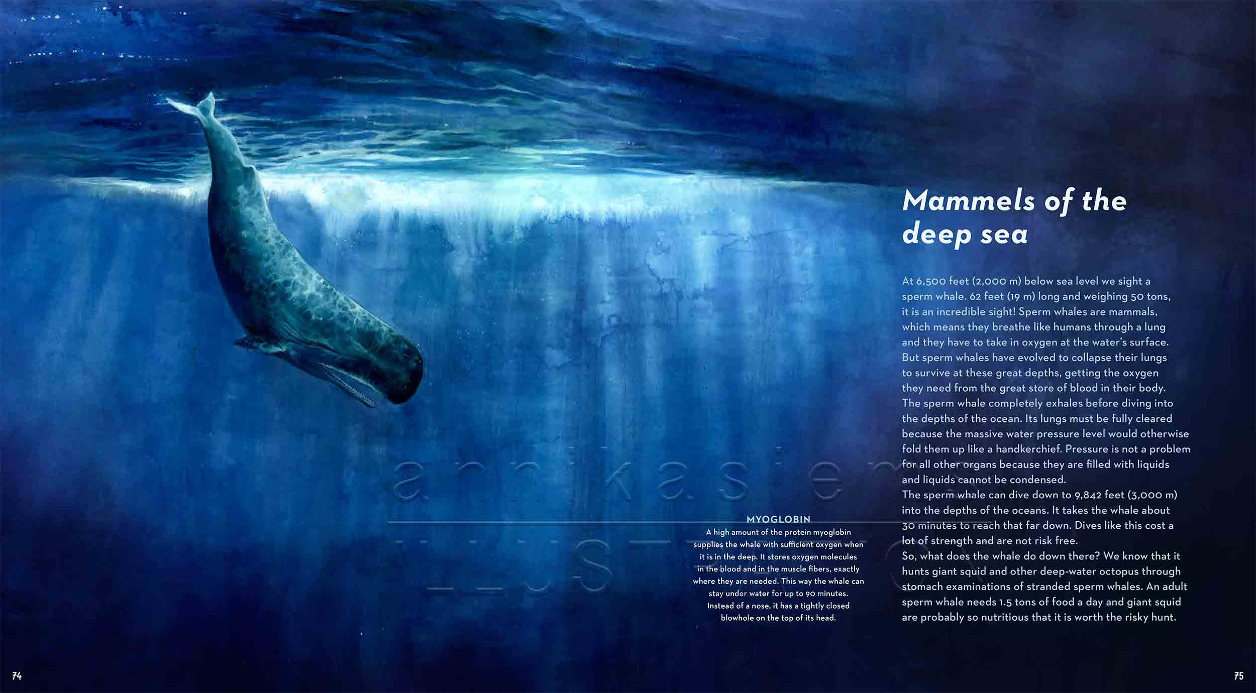 74-75-spermwhale-deep-sea-Englisch-submersible-©annikasiems-plankton_deepsea-zooplankton.jpg