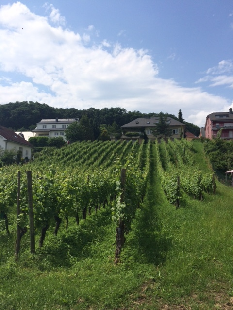 Luxembourg vineyard
