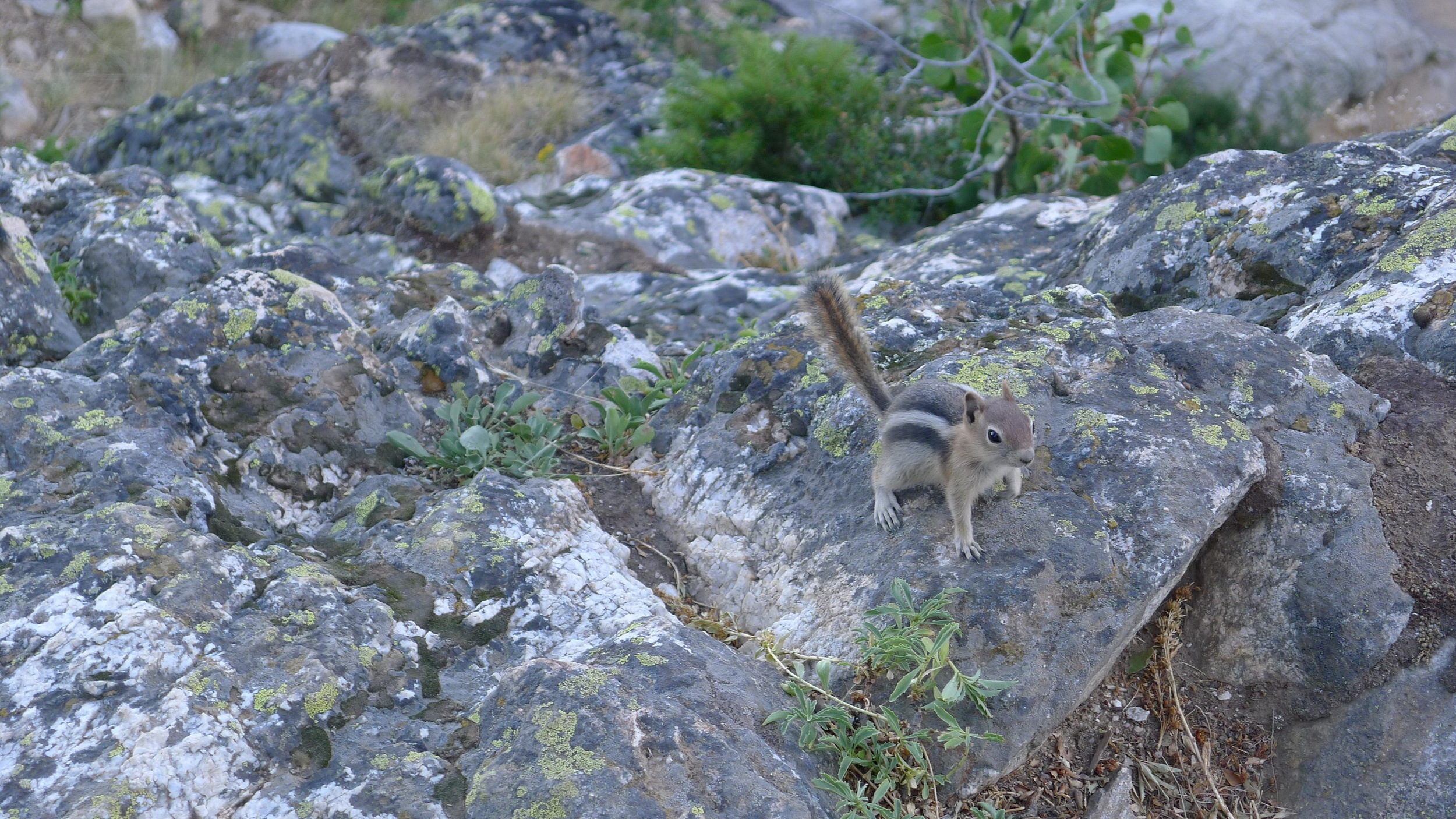 Chipmunk at Grand Teton National Park